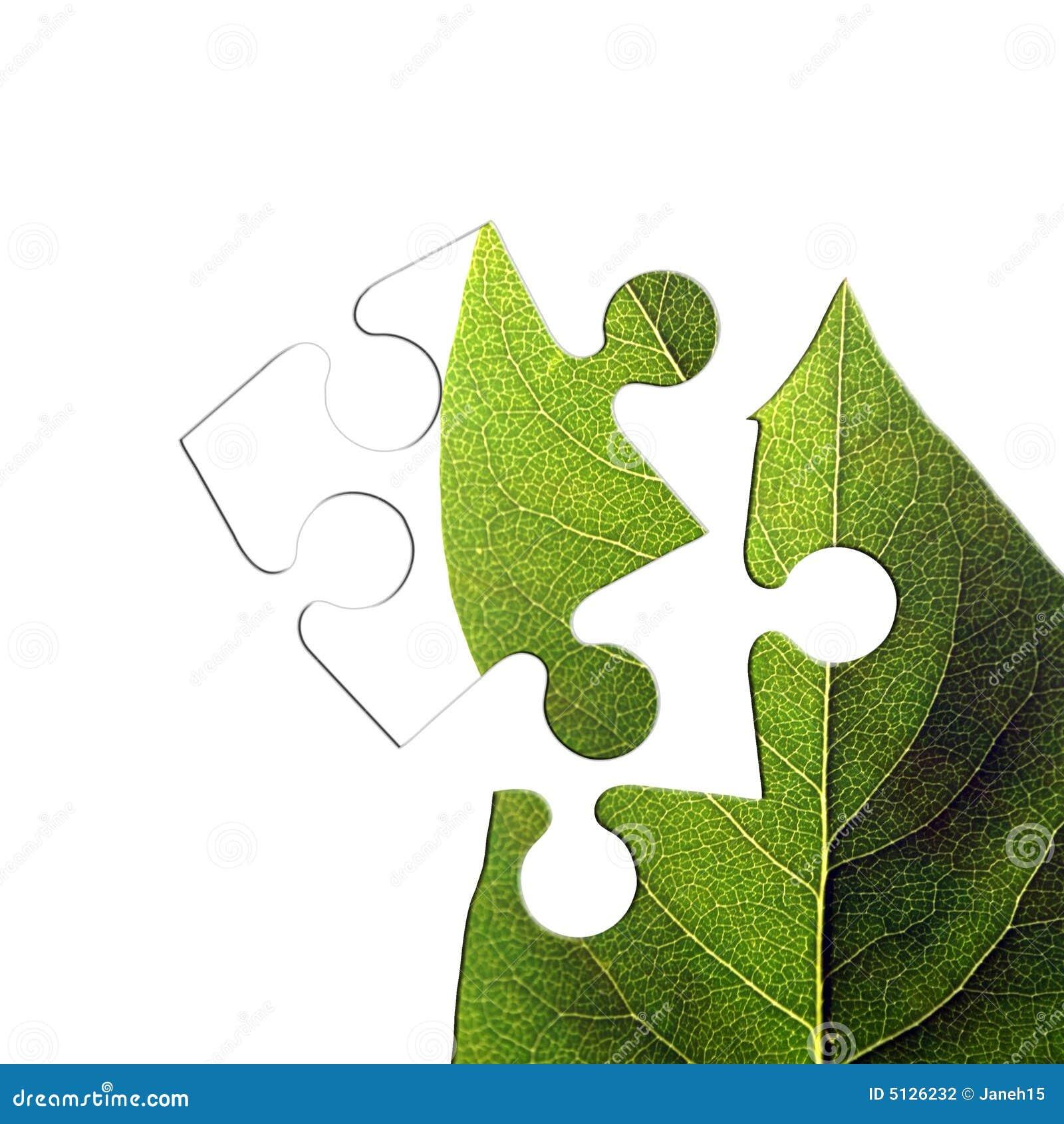 绿色曲线锯的叶子