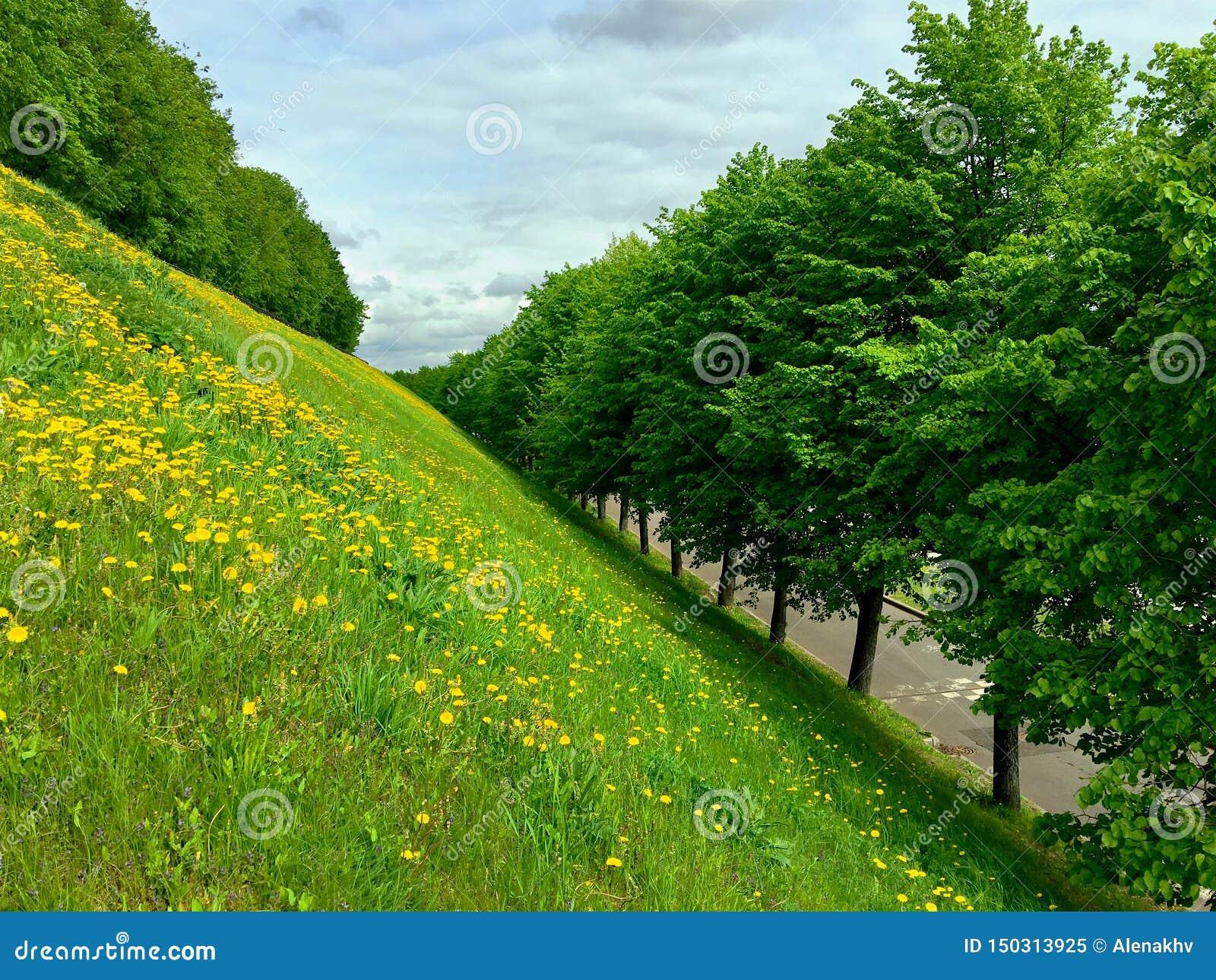 绿色树的胡同在绿草和黄色花小山的脚的