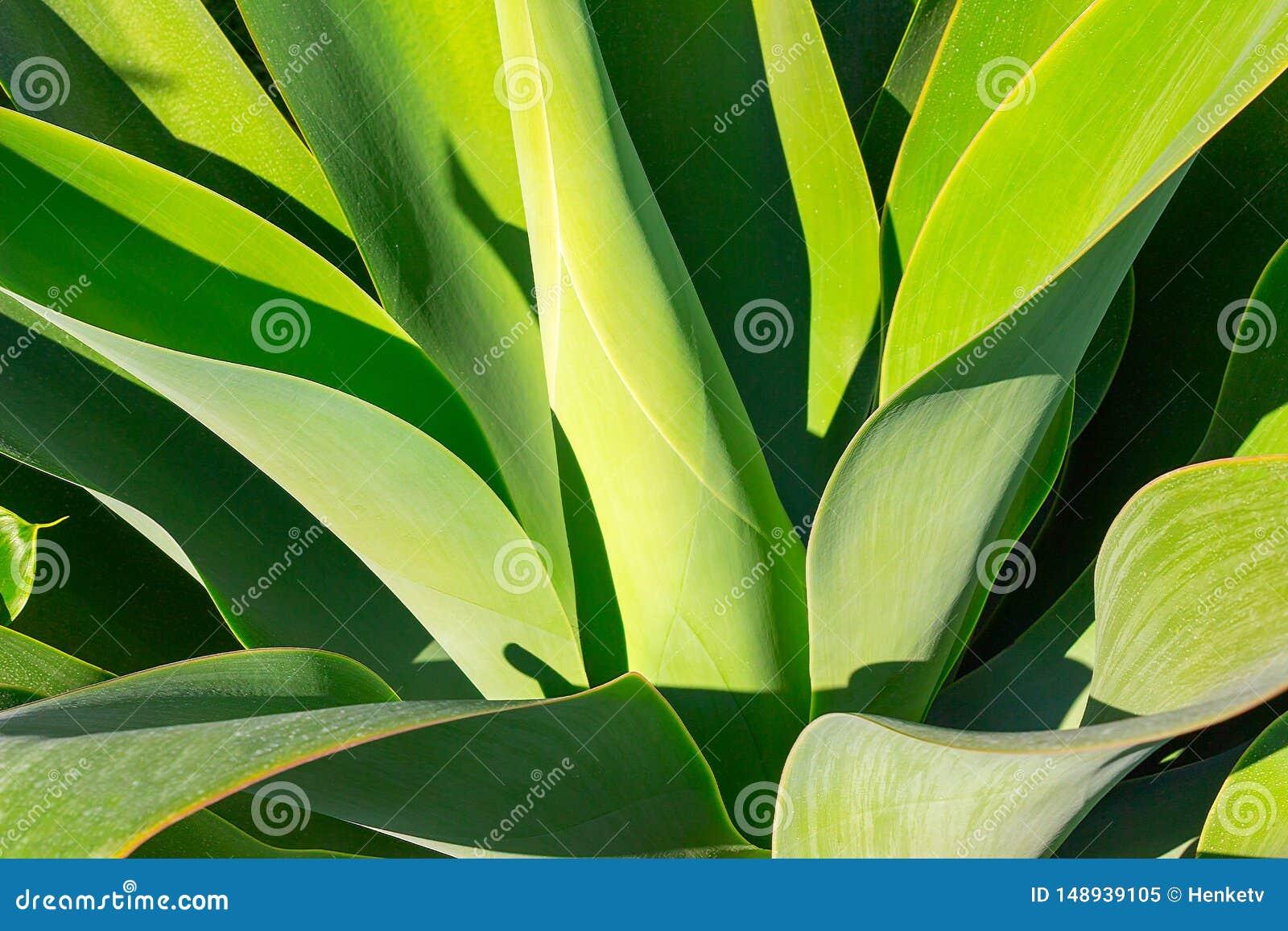 绿色植物丝兰或生物演化谱系图解非常严密地夺取了,关闭