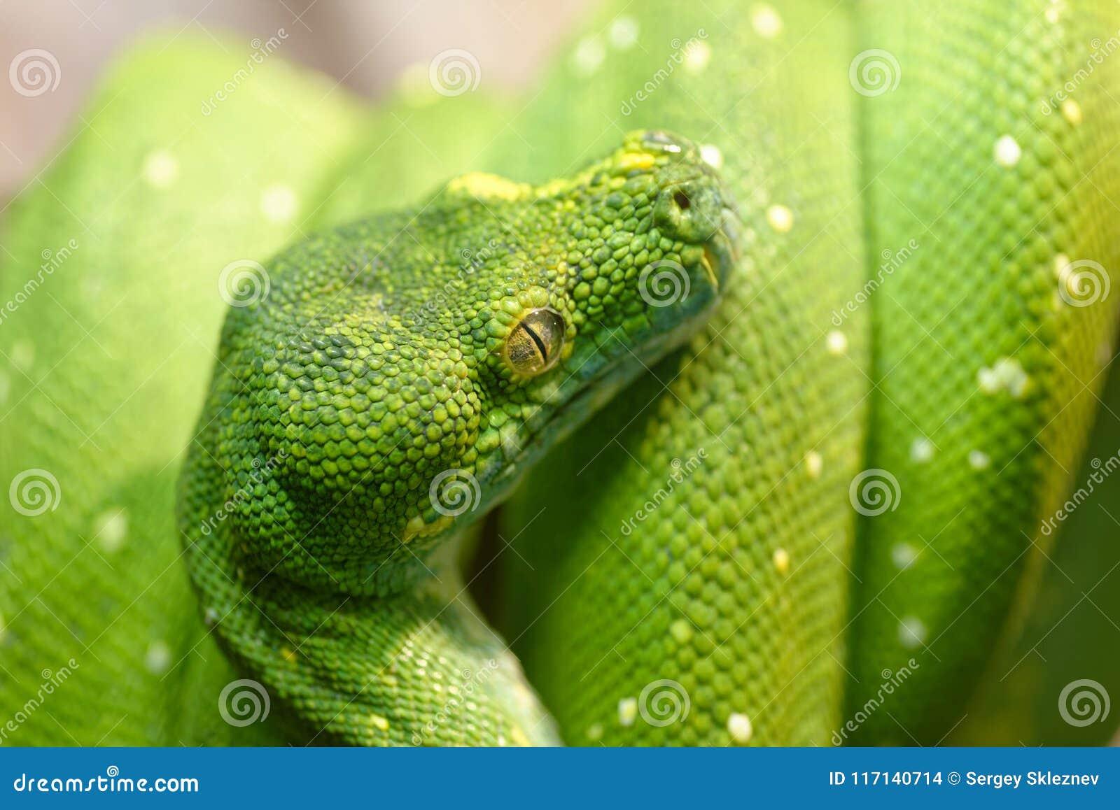 绿色结构树Python
