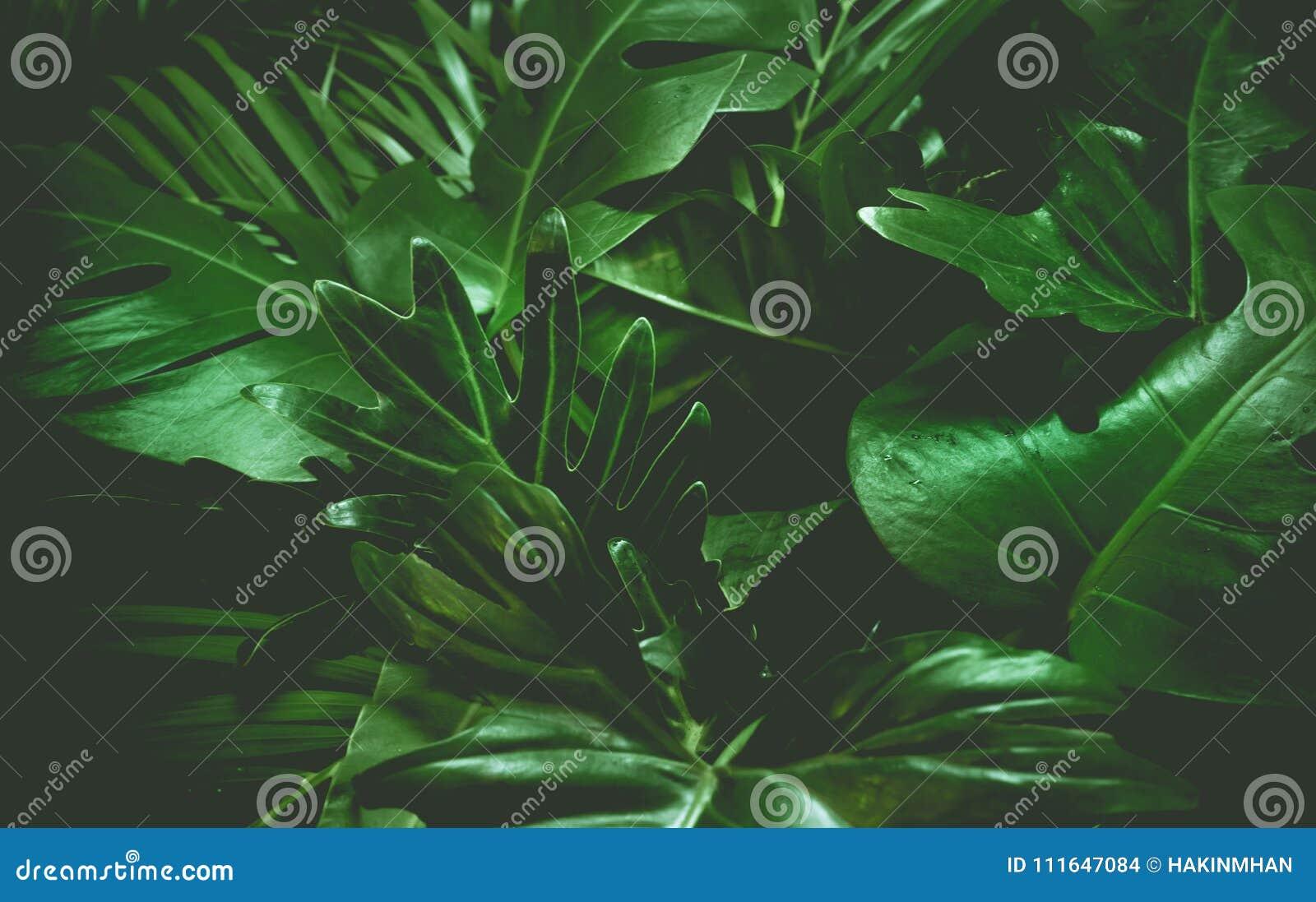 绿色背景概念 热带棕榈叶,密林叶子