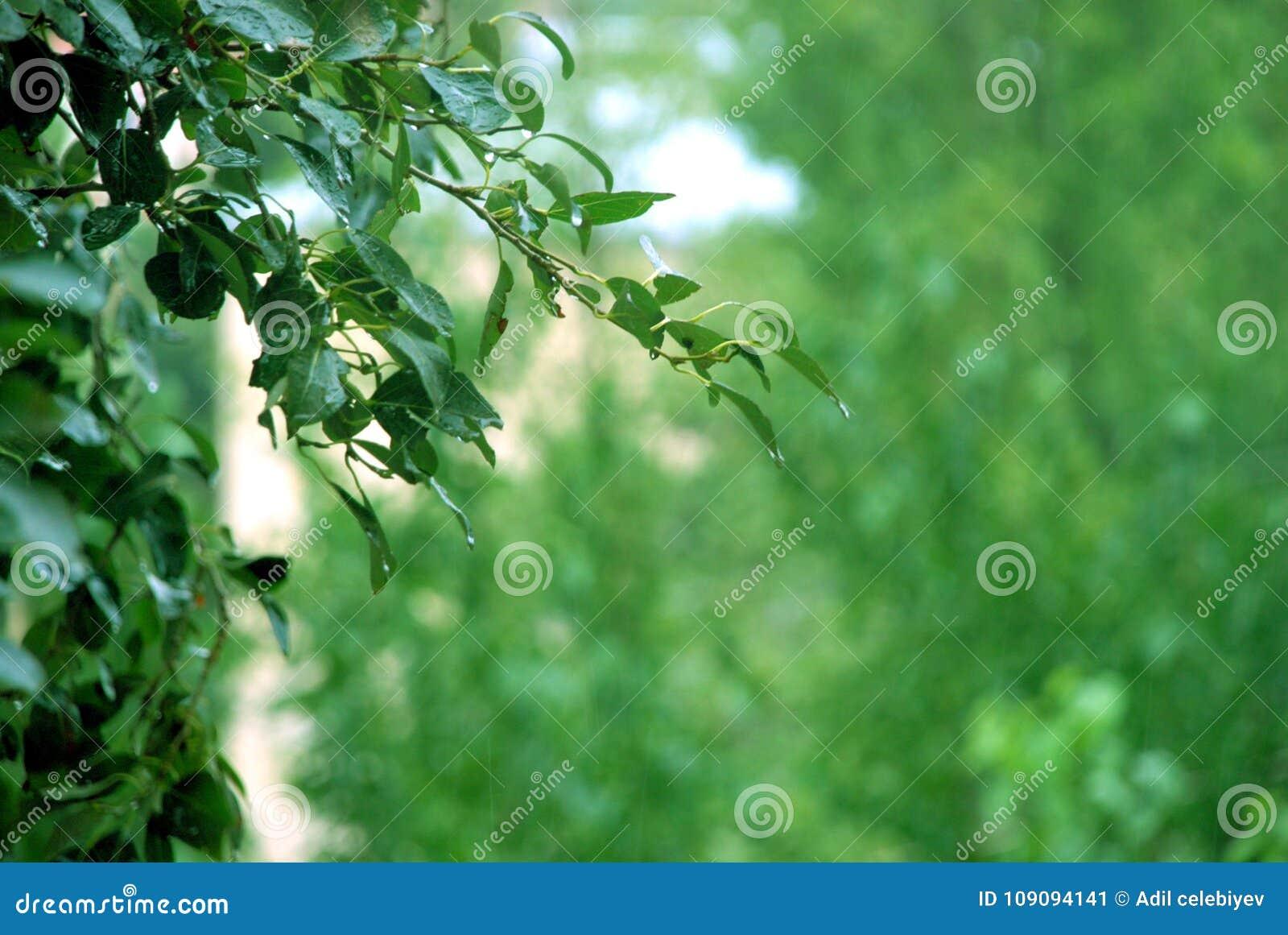 绿色背景 绿色迷离纹理和背景 一片绿色叶子的抽象背景纹理