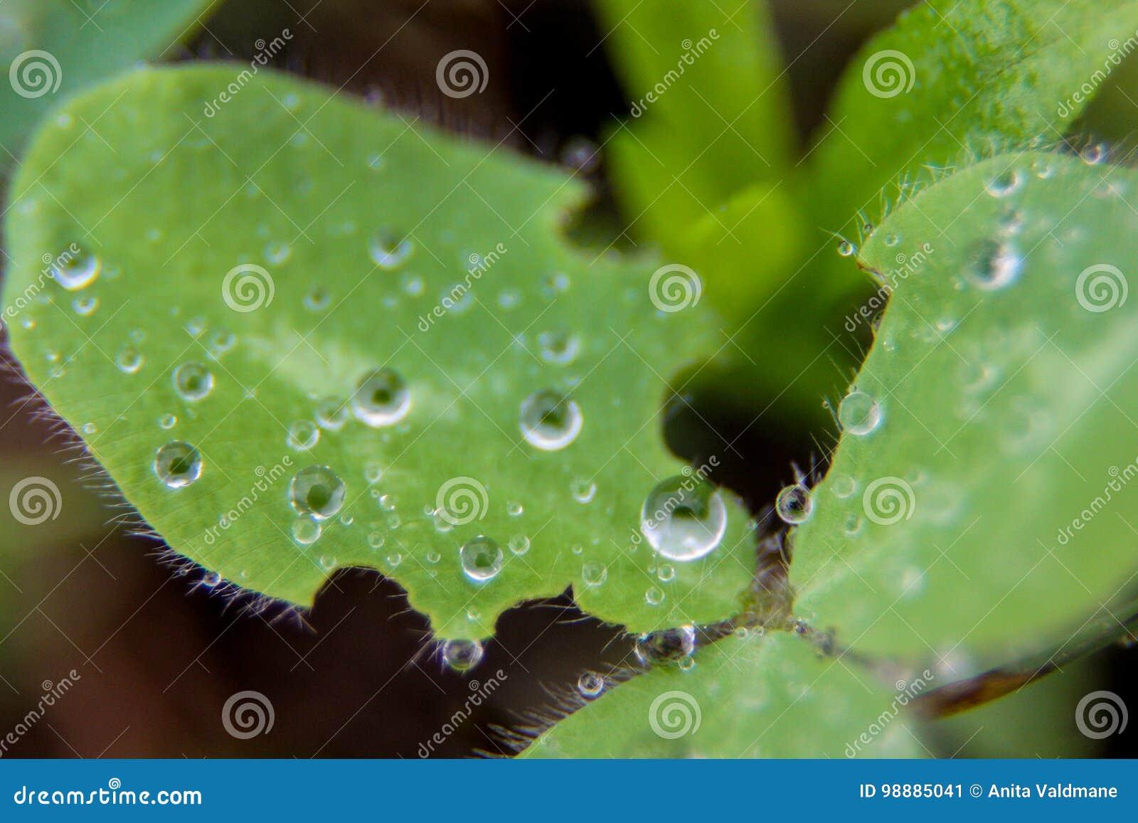 绿色花在与泡影的水中