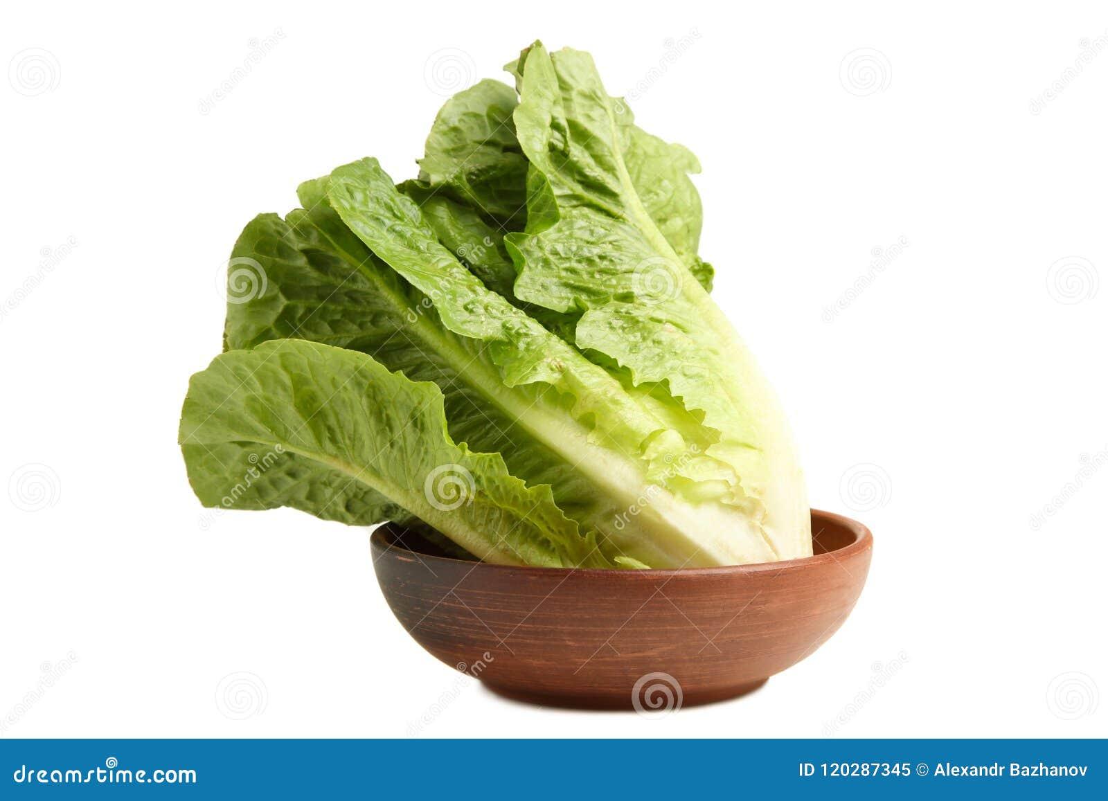 绿色莴苣长叶莴苣