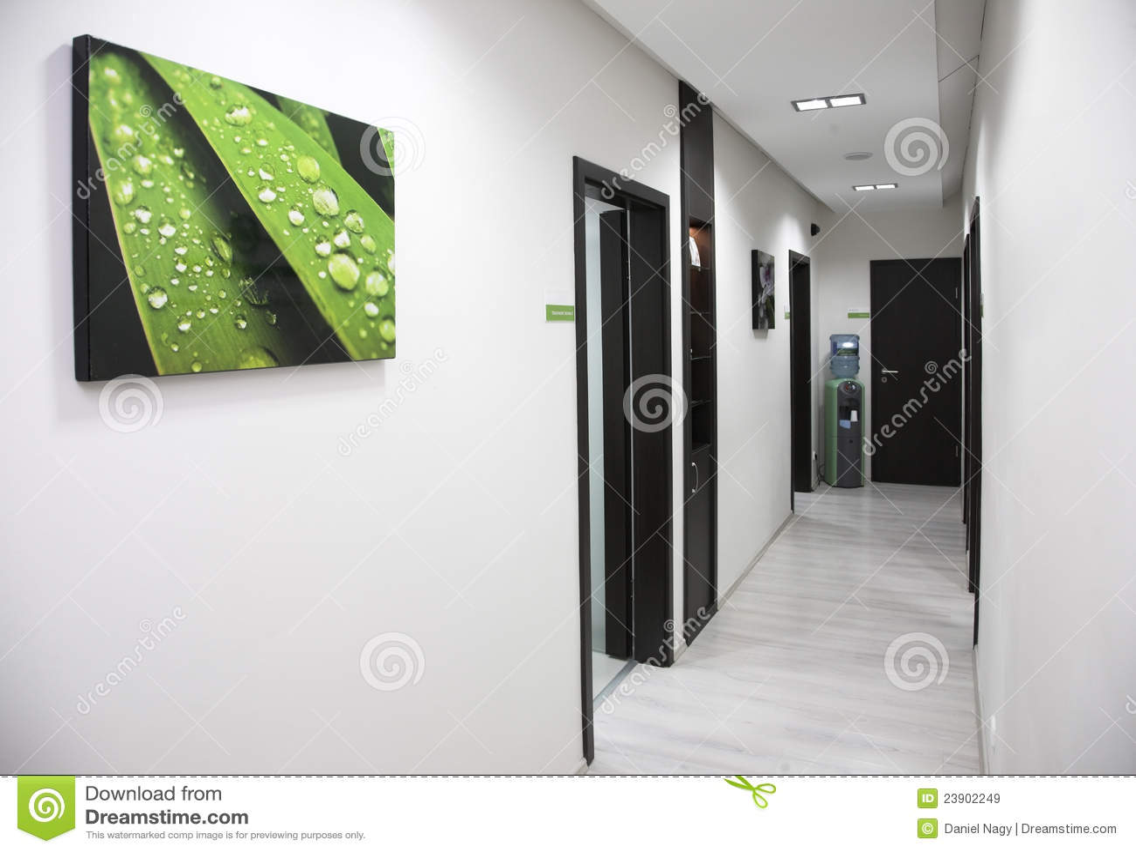 绿色走廊停止的图象叶子墙壁湿白色图片