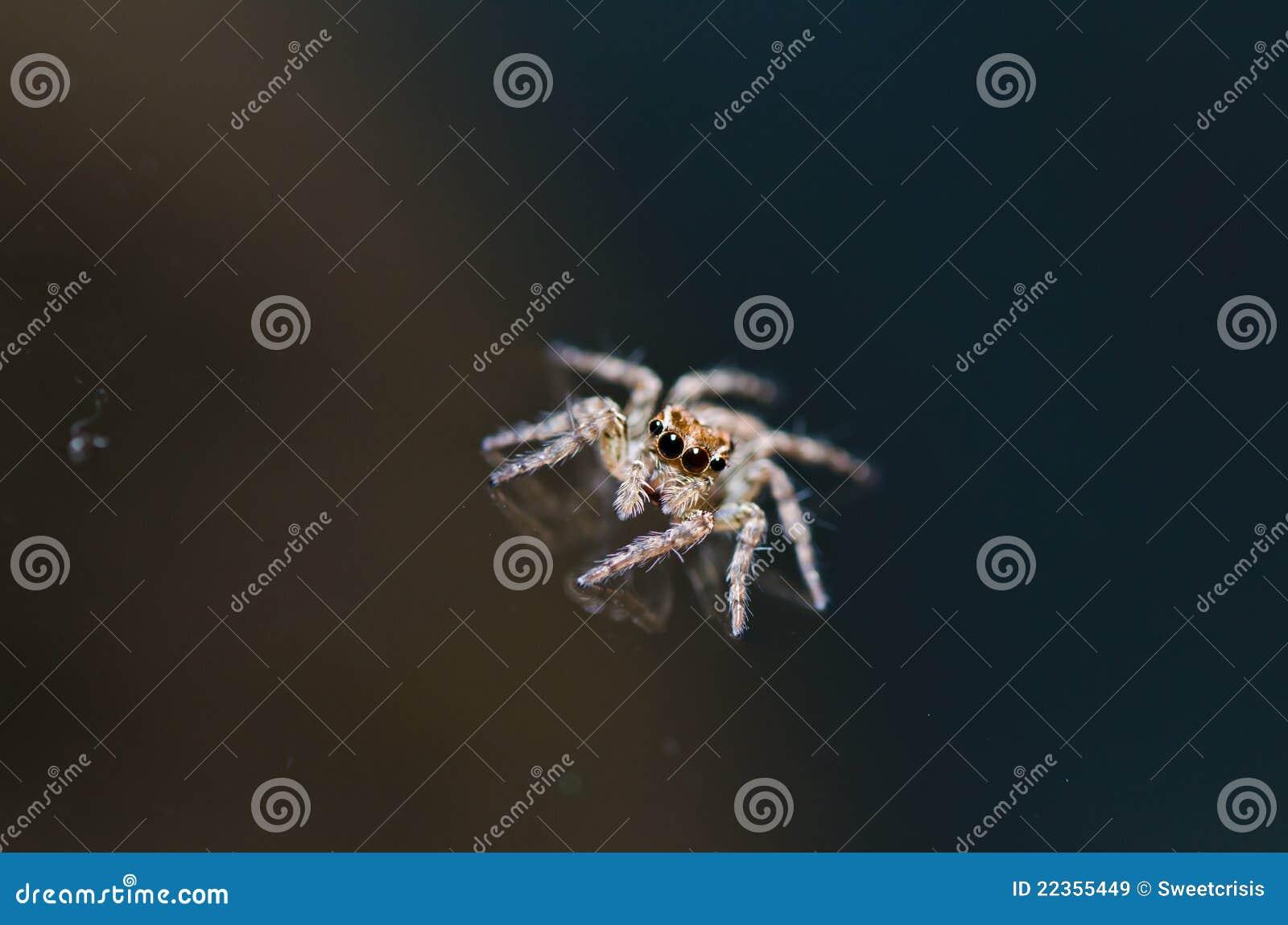 绿色跳的本质蜘蛛