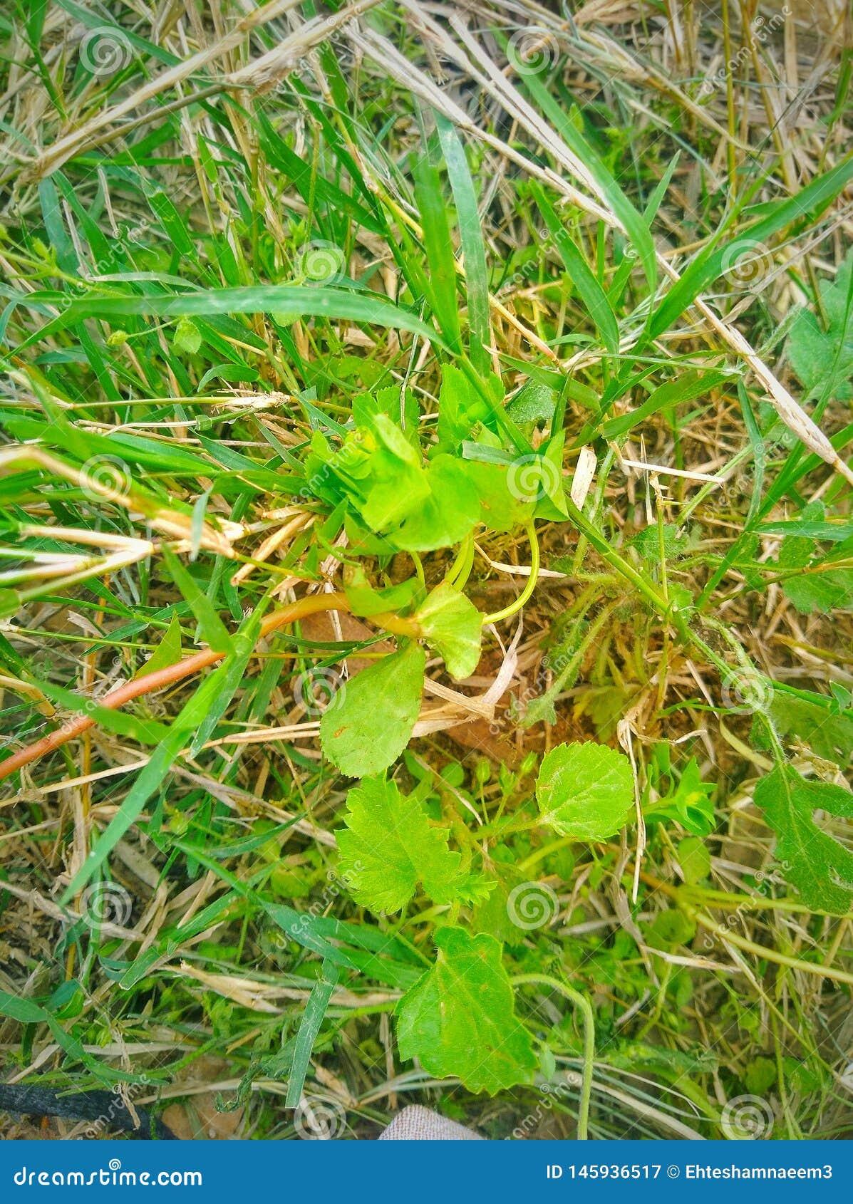 绿色野草本质上