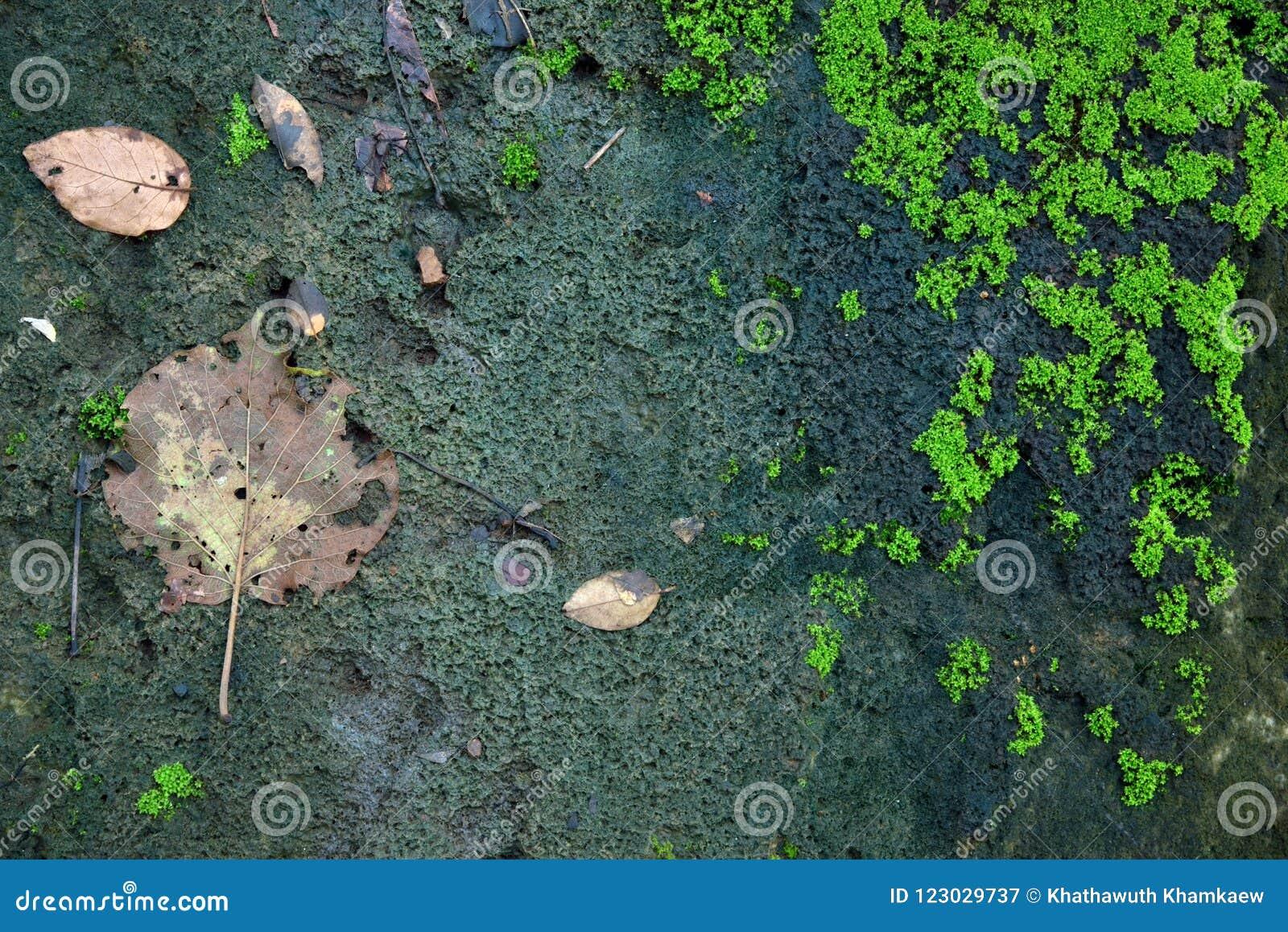绿色青苔纹理和背景在石自然