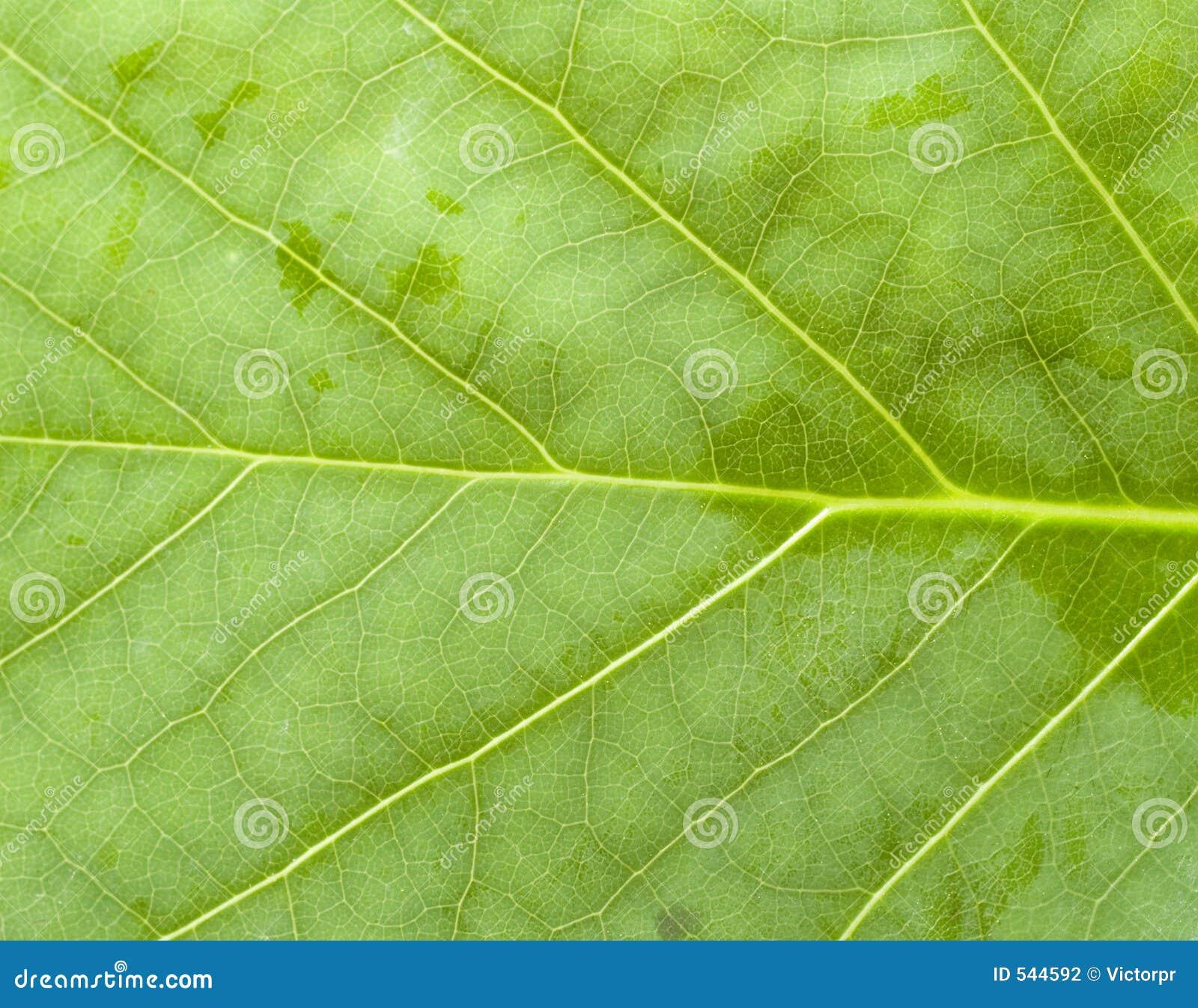 Download 绿色 库存照片. 图片 包括有 生活, 结构树, 昆虫, 缩放, 宏指令, 关闭, 回归线, 植物群, 工厂 - 544592