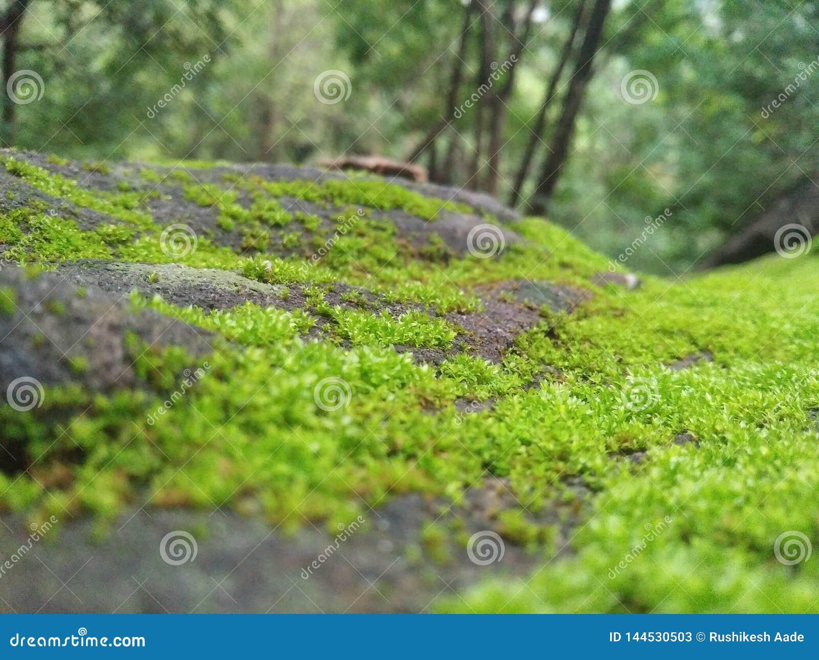 绿草出现在硬岩石头