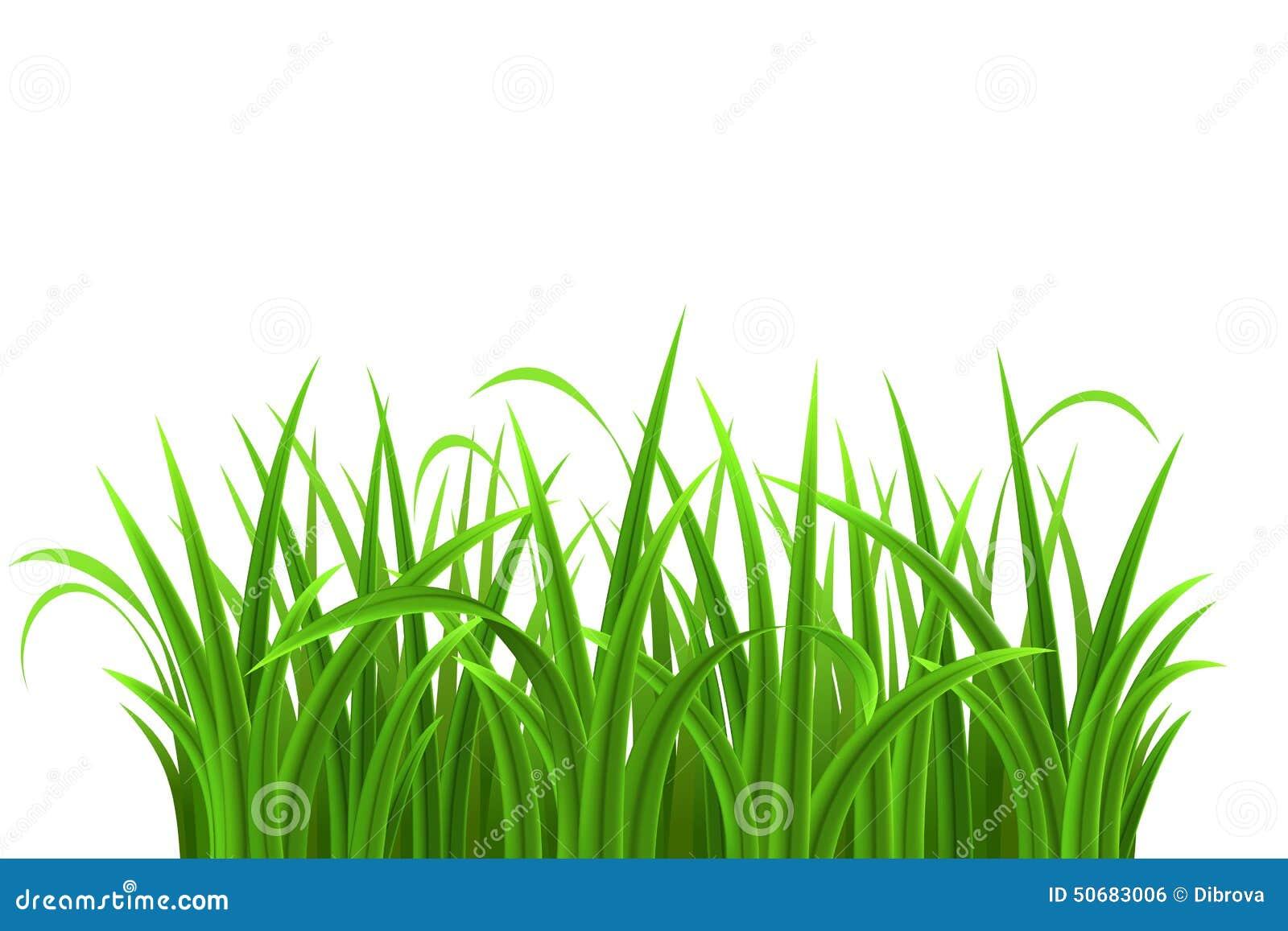 Download 绿草 向量例证. 插画 包括有 自然, 叶子, 本质, 背包, 醉汉, 空白, 工厂, 草甸, 新鲜, 草本 - 50683006
