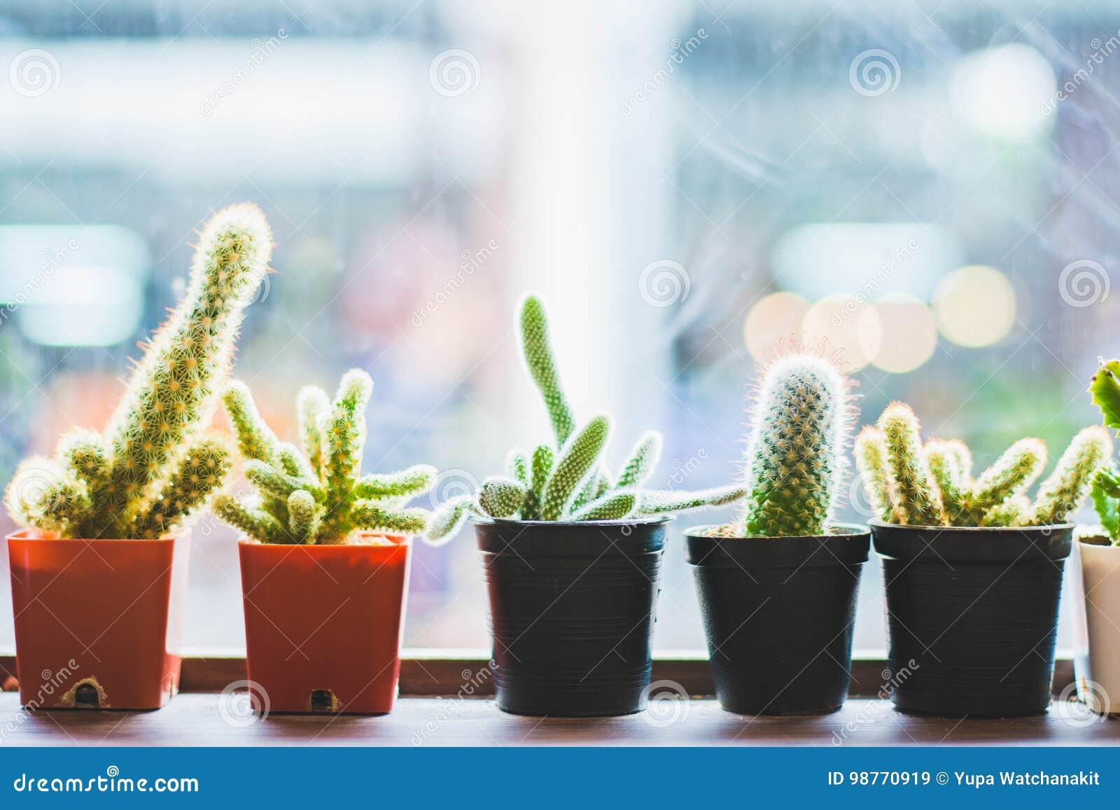 罐的仙人掌植物