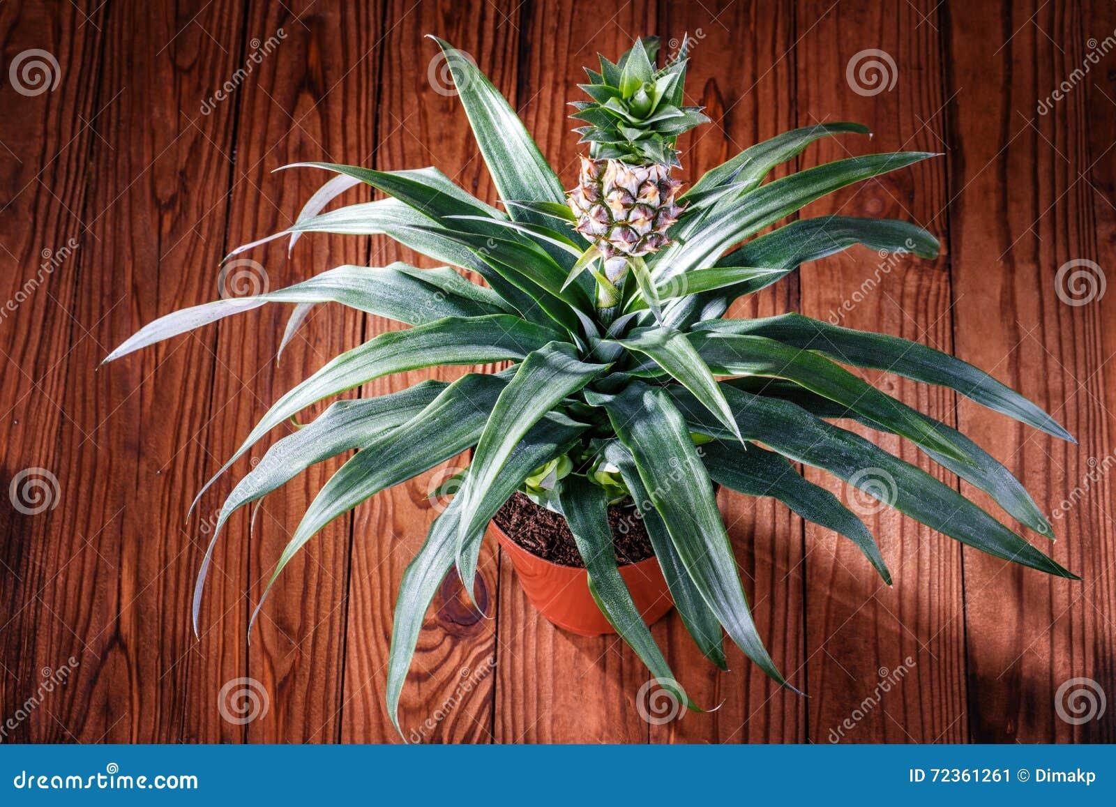 罐菠萝木头背景
