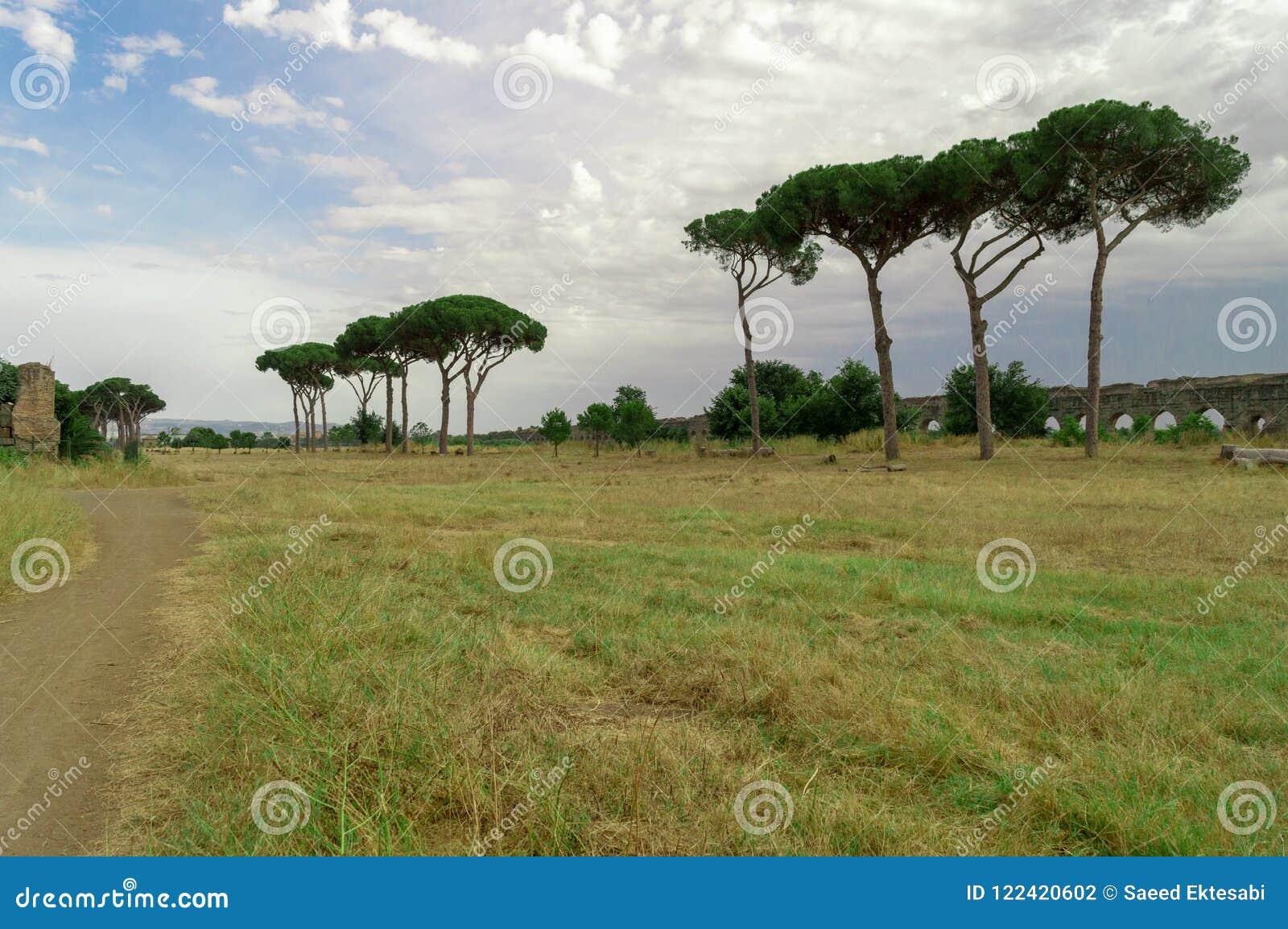 罗马树在背景中环境美化与废墟