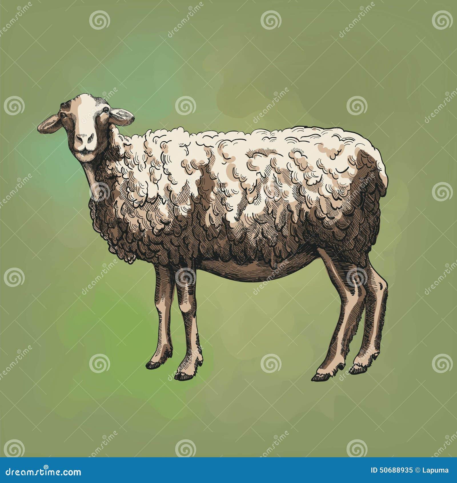 Download 绵羊饲养 向量例证. 插画 包括有 本质, 吃草, grunge, 收集, 手工制造, 农场, 哺乳动物 - 50688935
