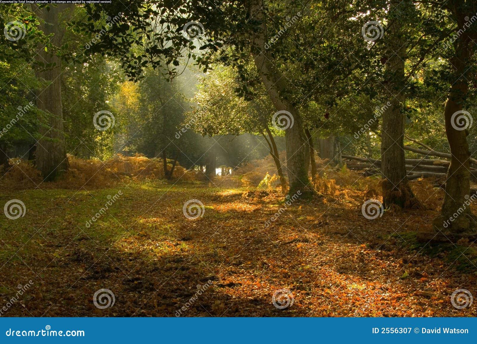 美丽如画结算的森林