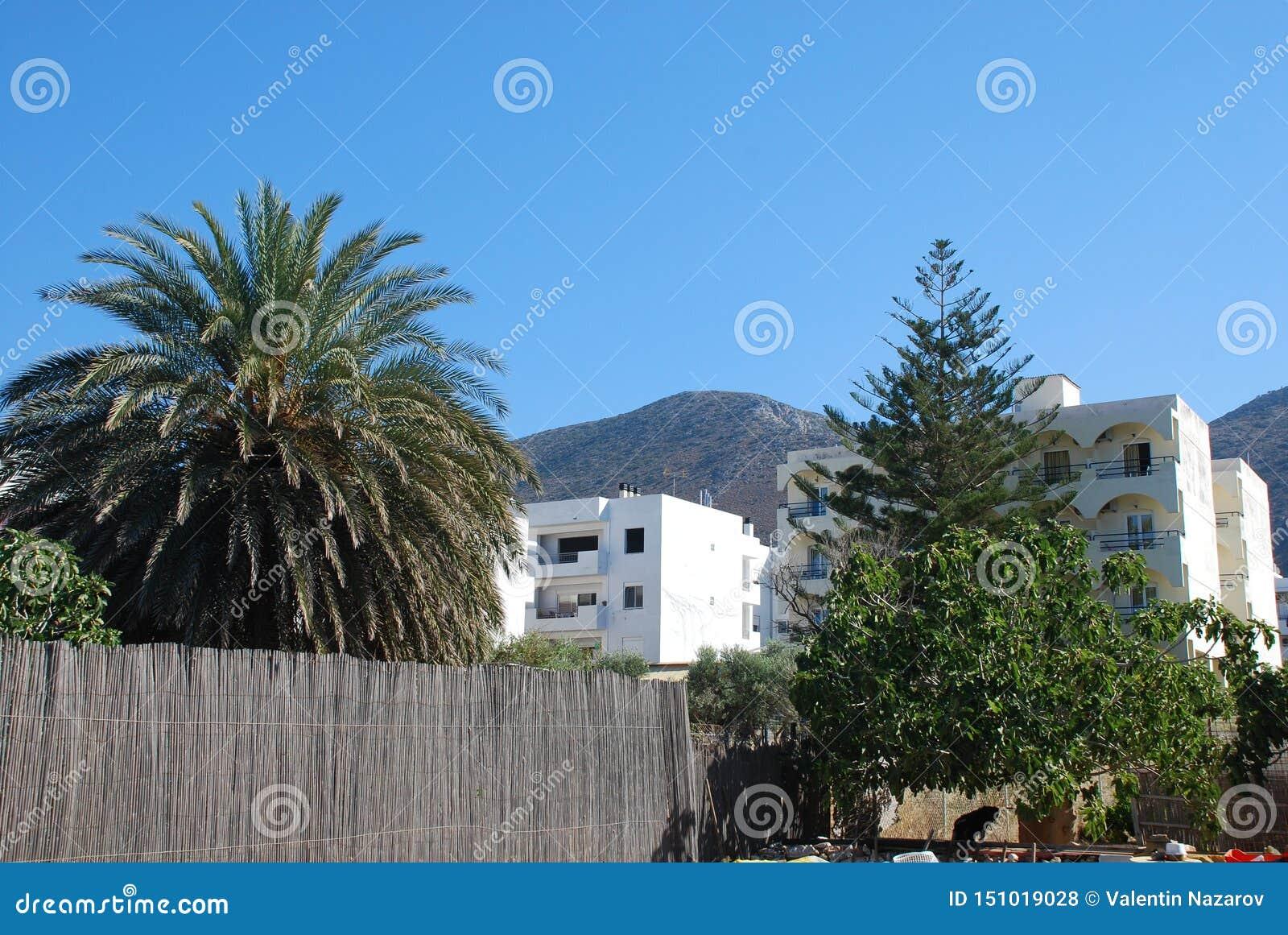 美丽的假日房子和热带树在山背景