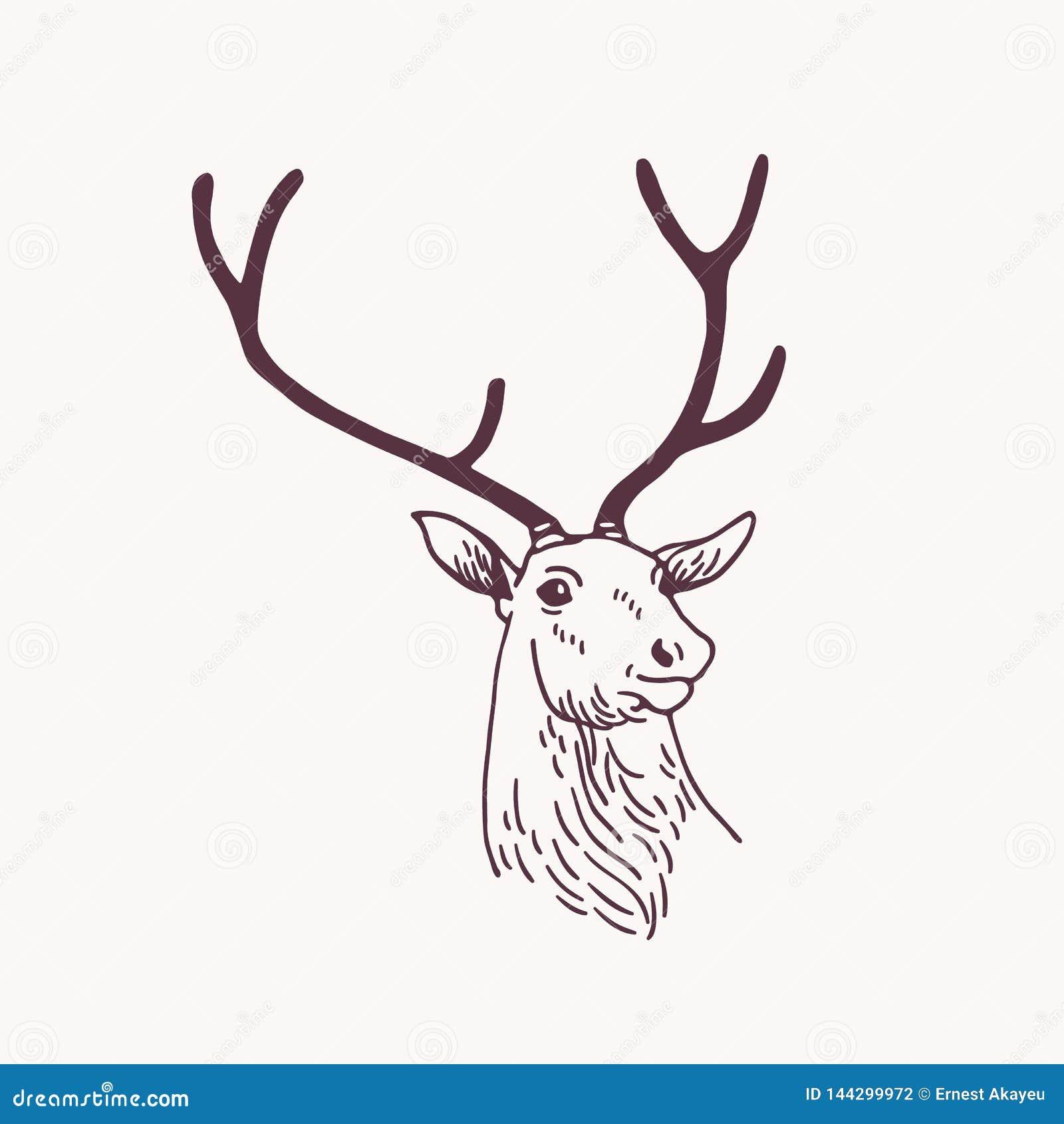 美丽的公鹿、驯鹿或者雄鹿头图画或剪影与典雅的鹿角 森林动物画与