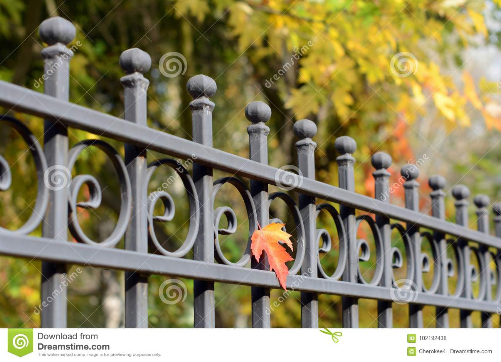 美丽的加工的篱芭 装饰生铁篱芭的图象 金属范围关闭 金属伪造了篱芭