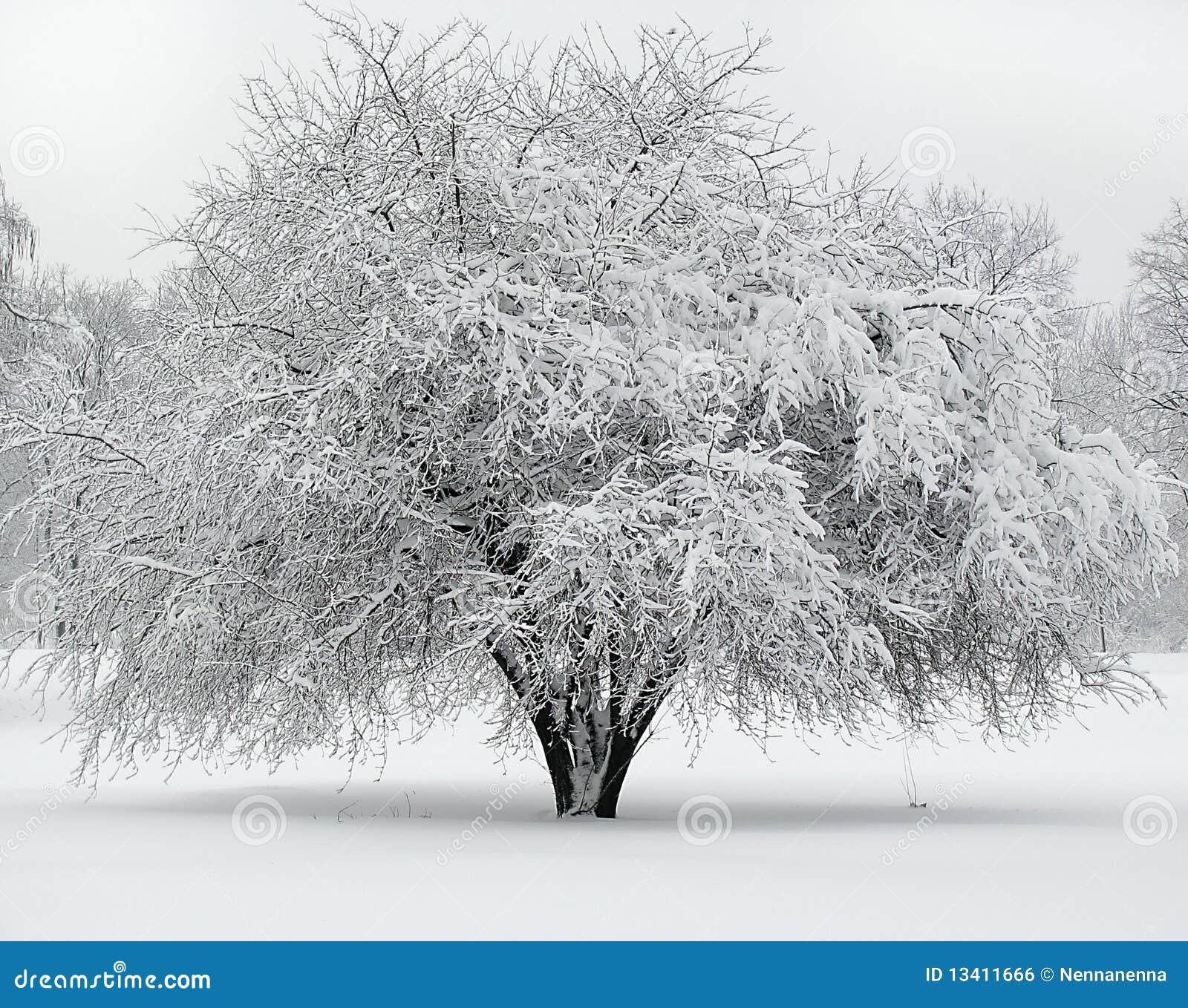 美丽的包括的雪结构树