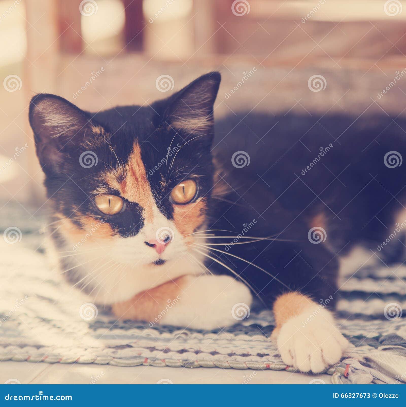 美丽的多彩多姿的猫