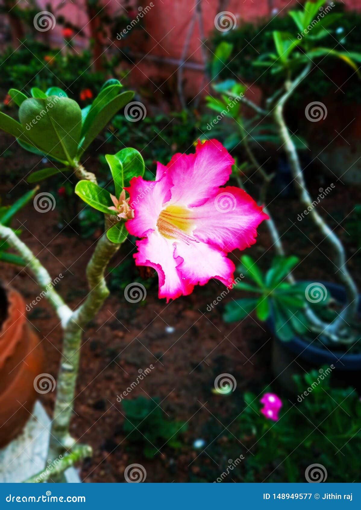 美丽的多颜色花 自然的秀丽