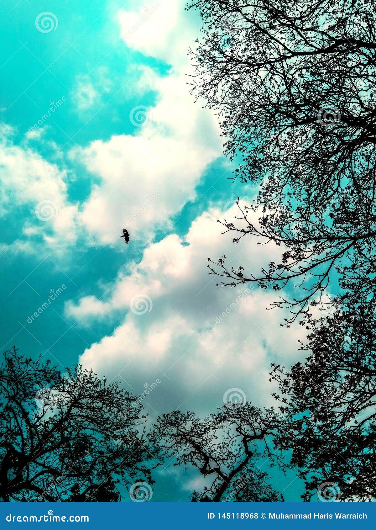 在天空的树