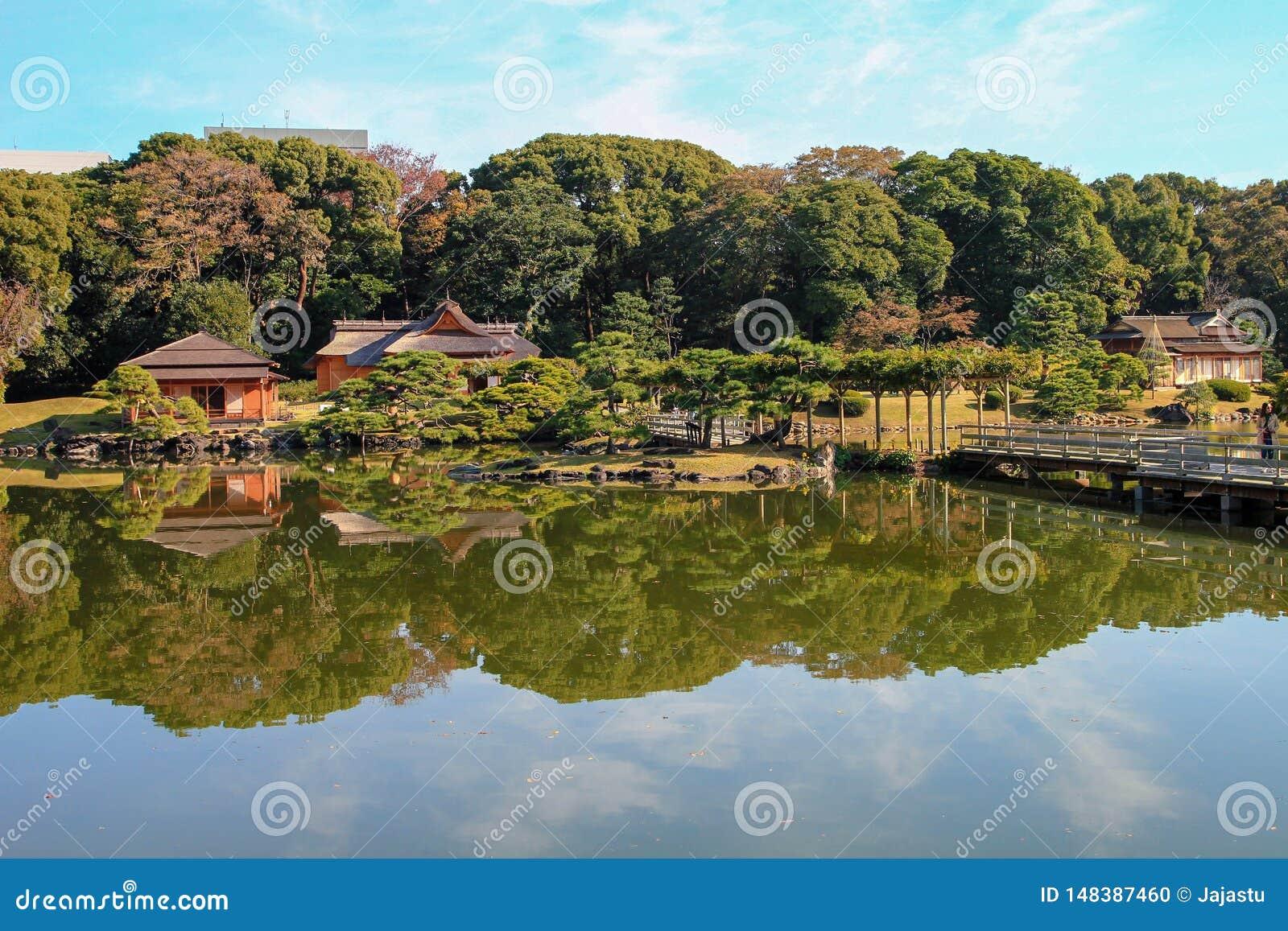 美丽的新宿公园在东京,日本