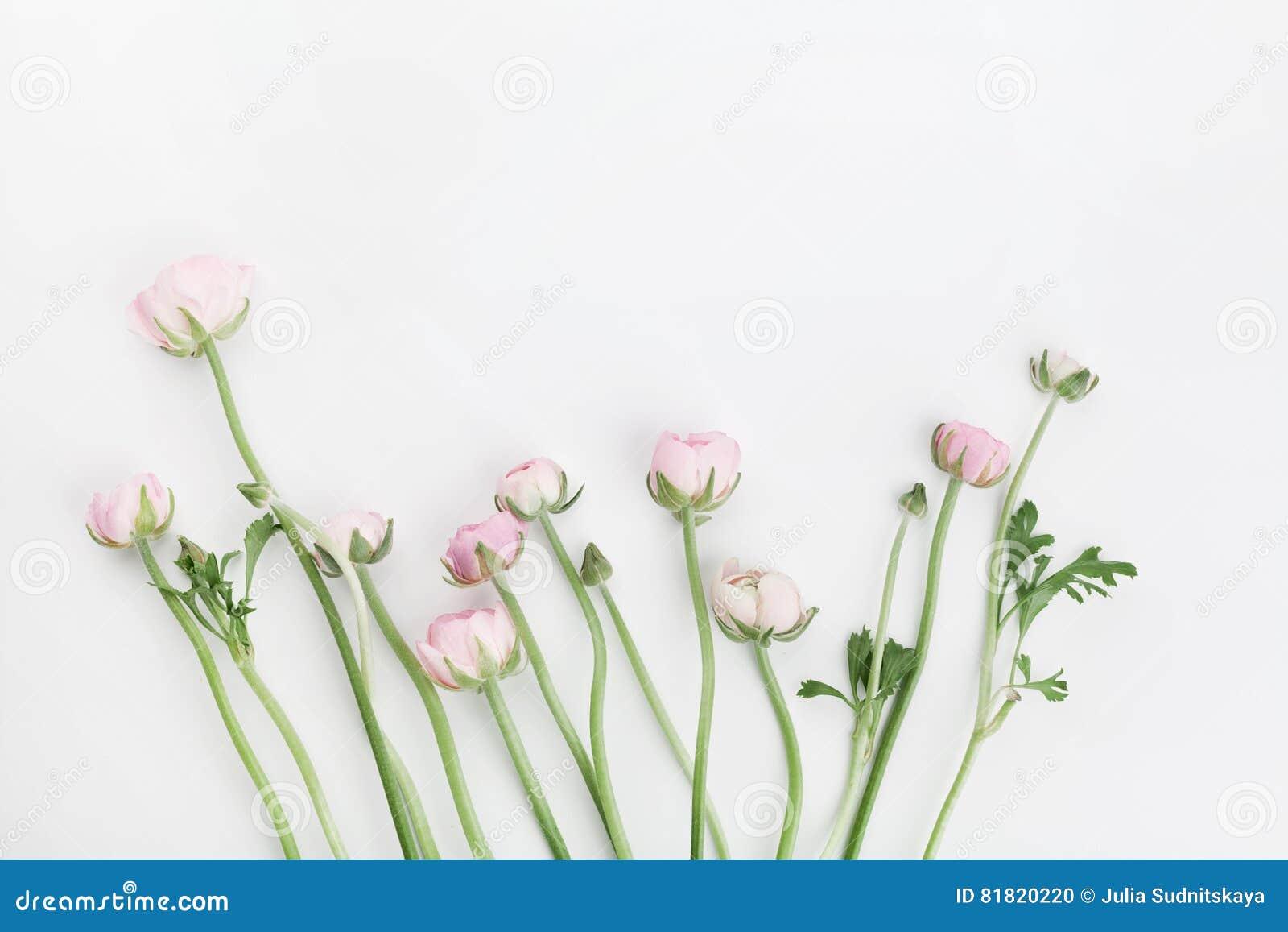 美丽的春天毛茛属在白色桌上从上面开花 花卉边界 婚礼大模型 淡色 清洗文本的空间