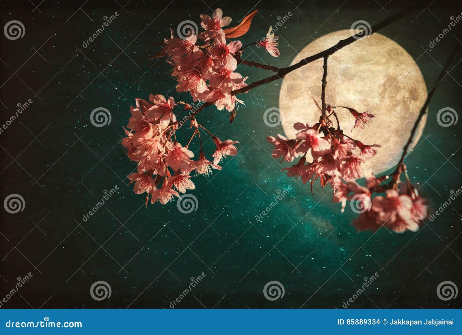 美丽的桃红色樱花佐仓在天空夜与满月和银河星的开花