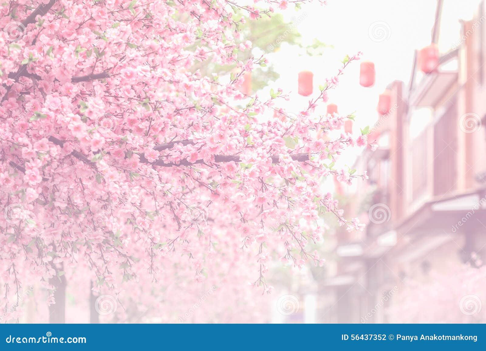 美丽的桃红色樱花(佐仓)花和软的焦点PR