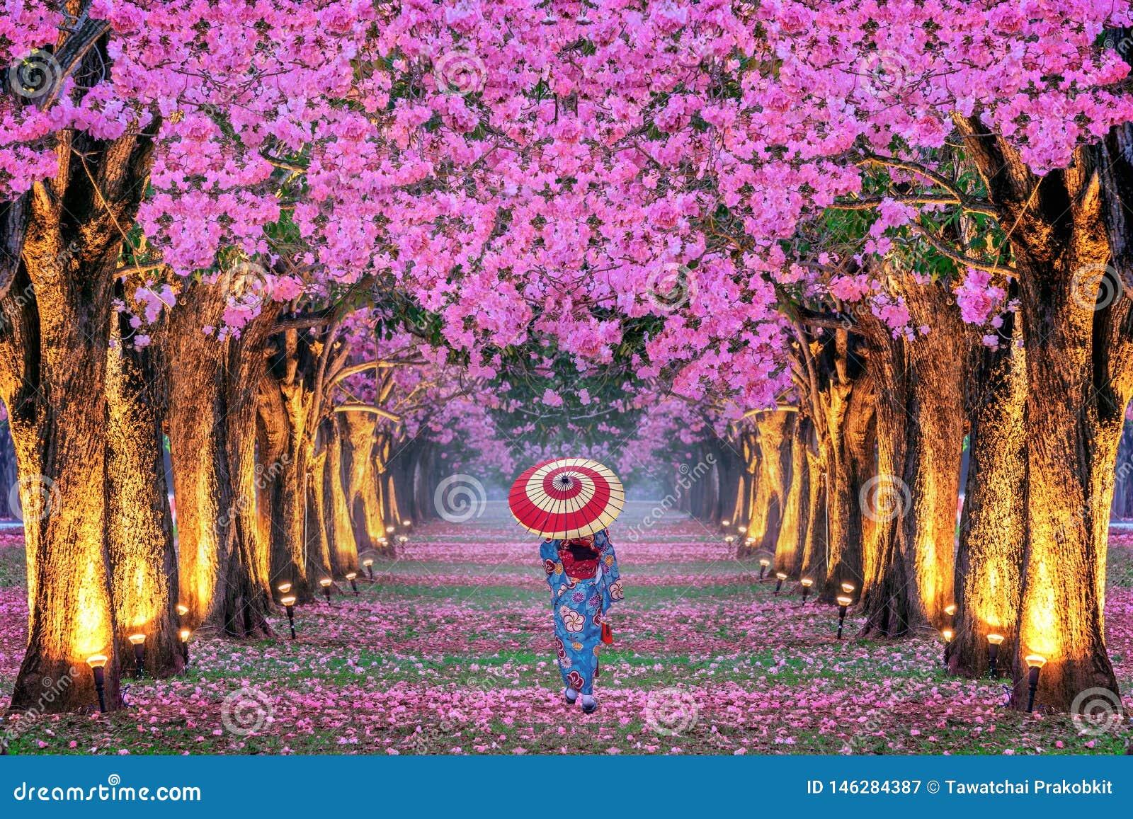 美丽的桃红色花树和和服女孩行