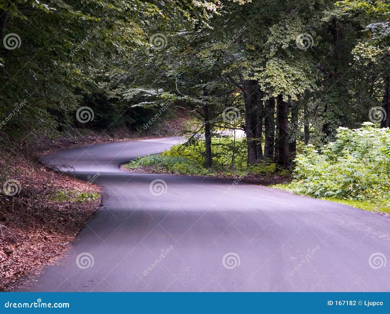 美丽的森林公路