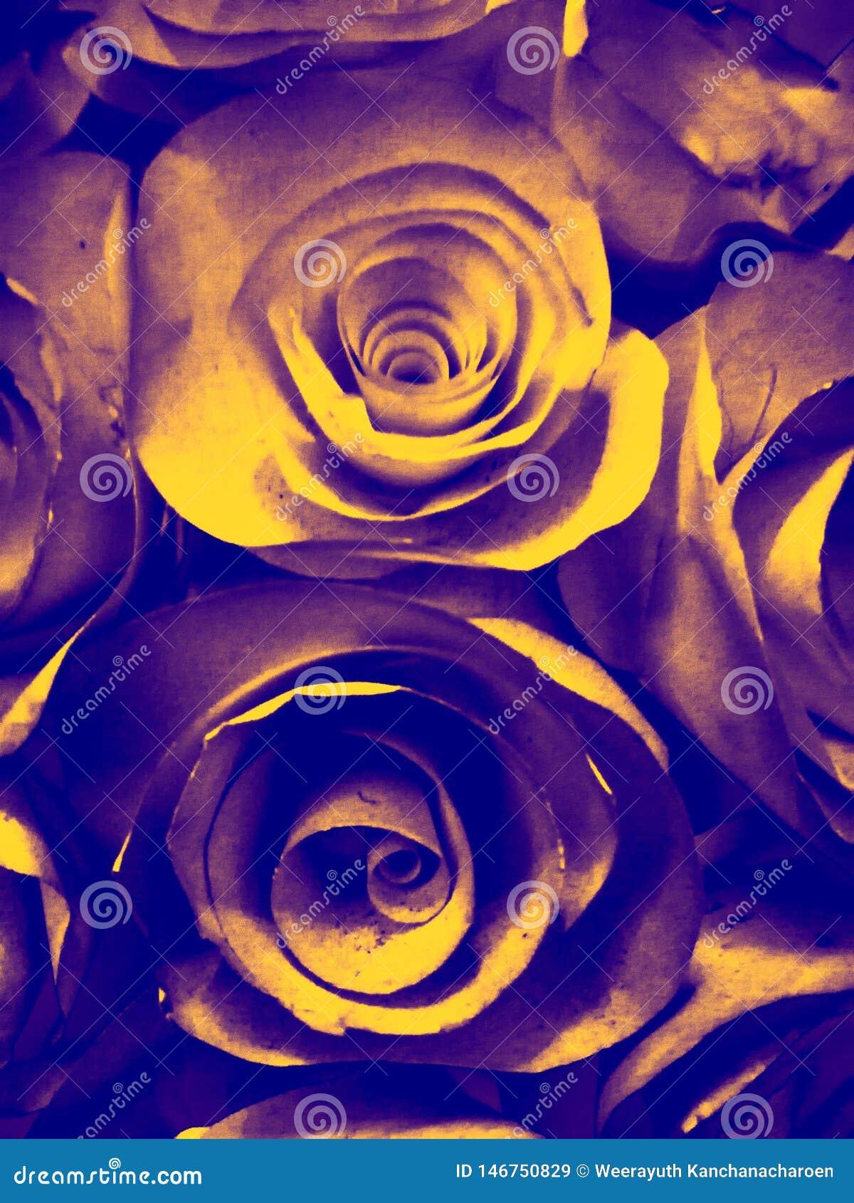 美丽的橙色金黄色和黑玫瑰色花例证背景和纹理在庭院里