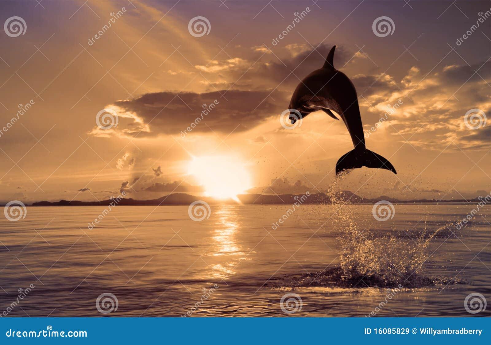美丽的海豚跳的光亮的水