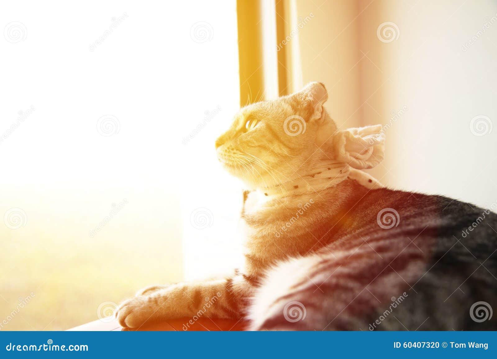美丽的猫坐窗口