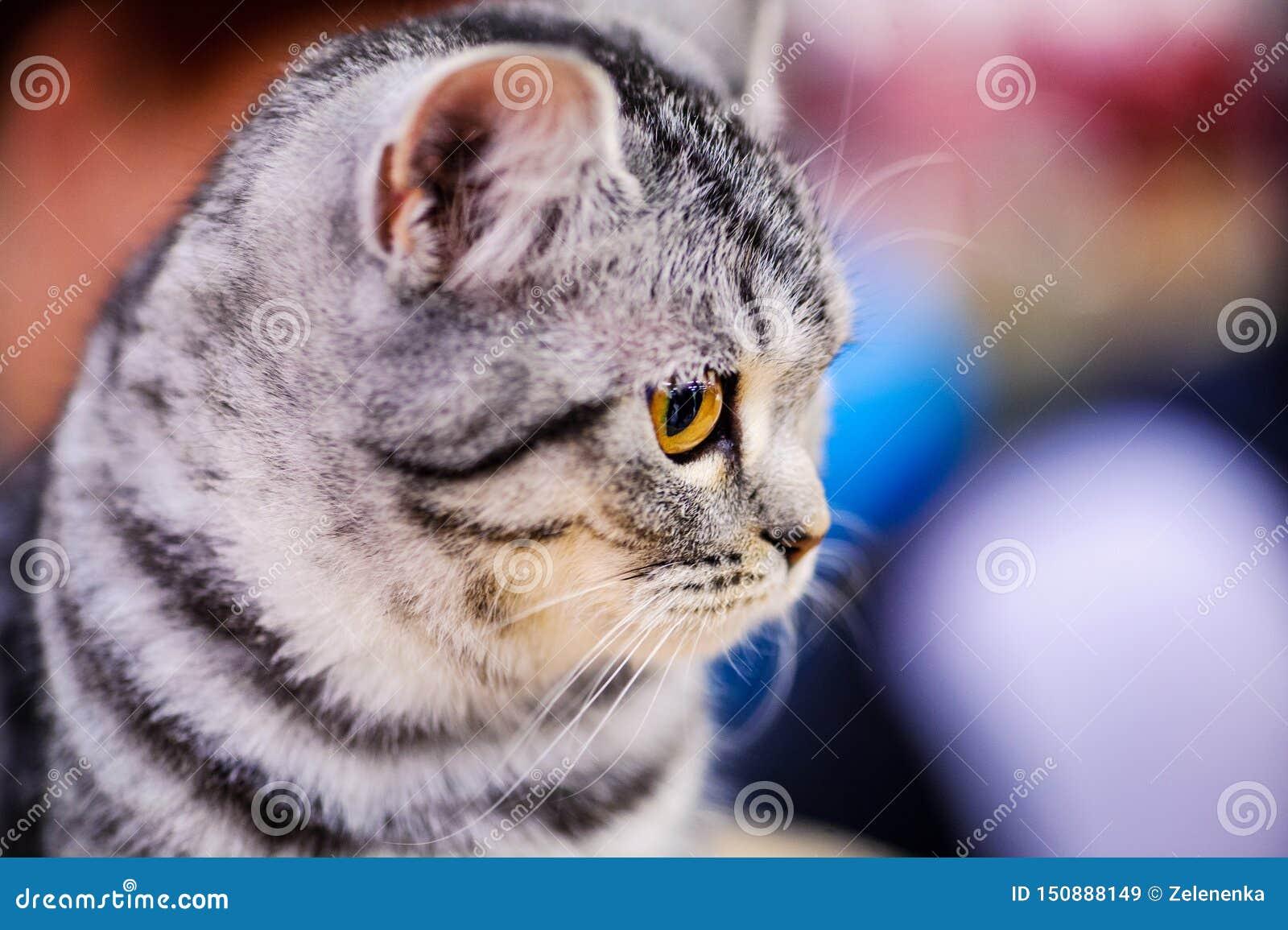 美丽的猫画象
