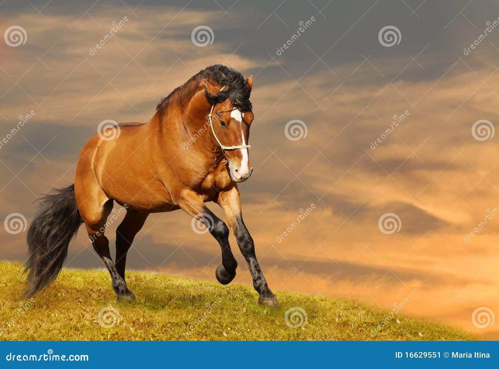 公�_美丽的疾驰的公马