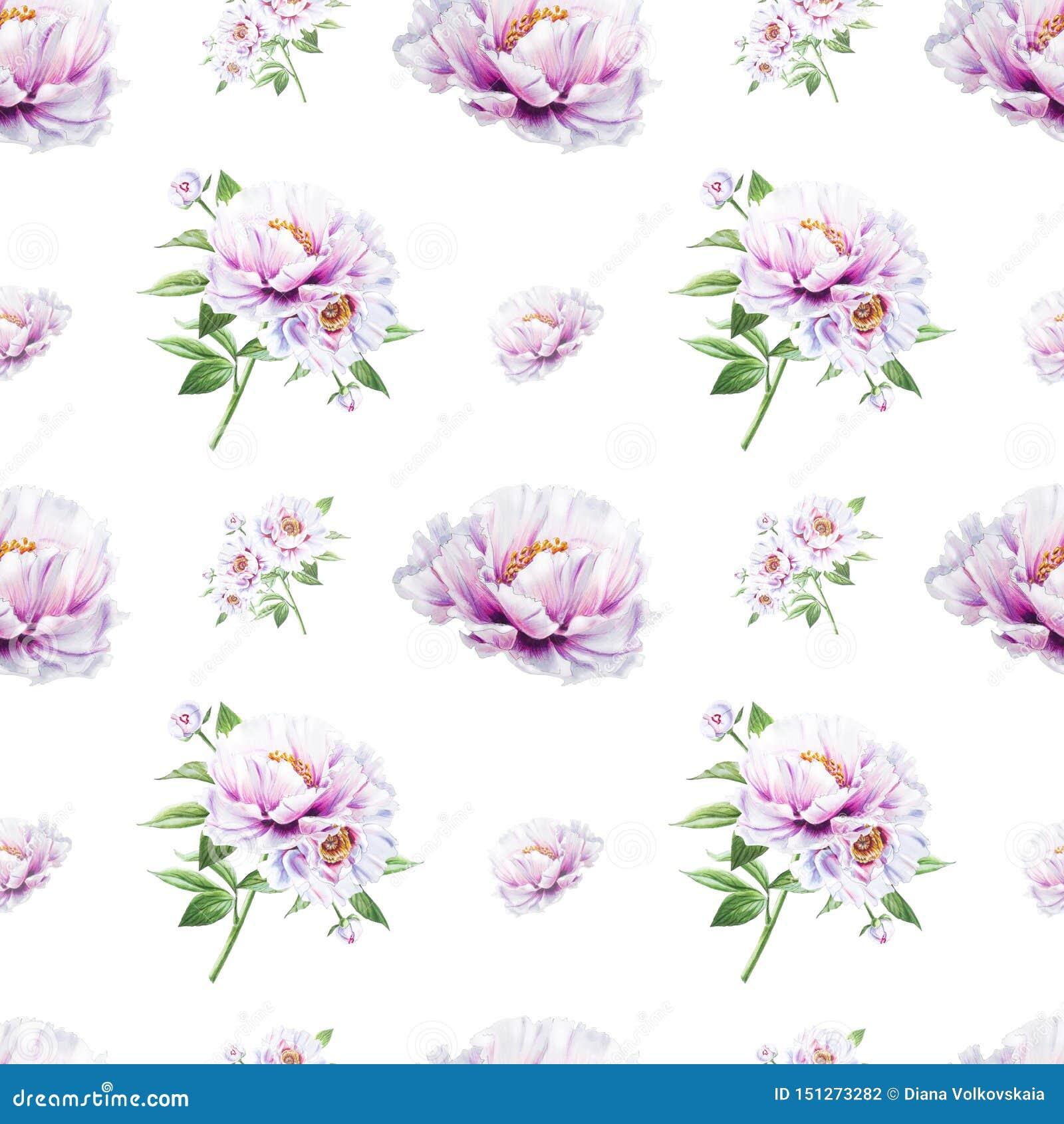 美丽的白色牡丹无缝的样式 ?? 花卉纹理 标志图画