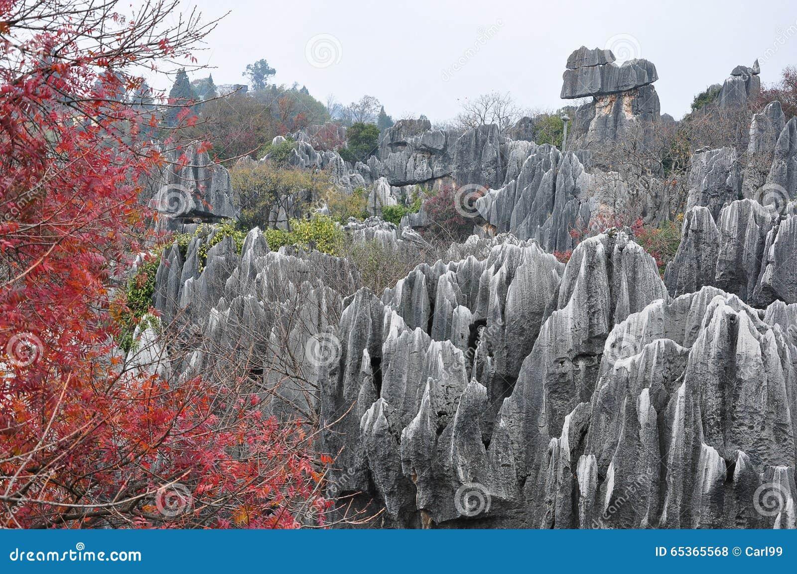 云南的,中国美丽的石森林.图片