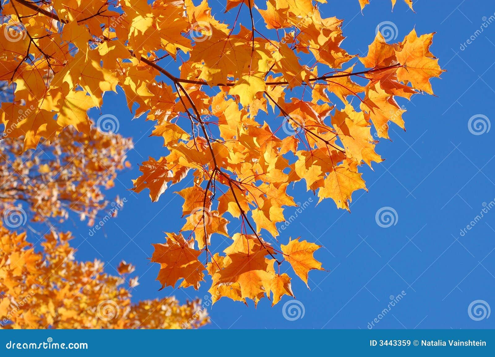美丽的秋天叶子