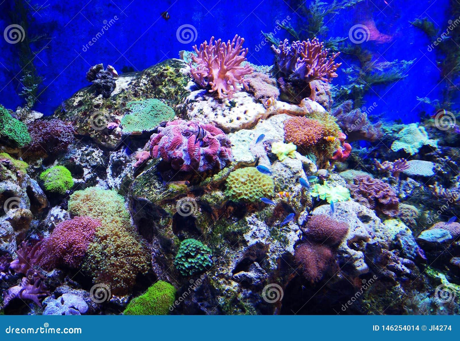 美丽的蝴蝶鱼和华美的珊瑚礁