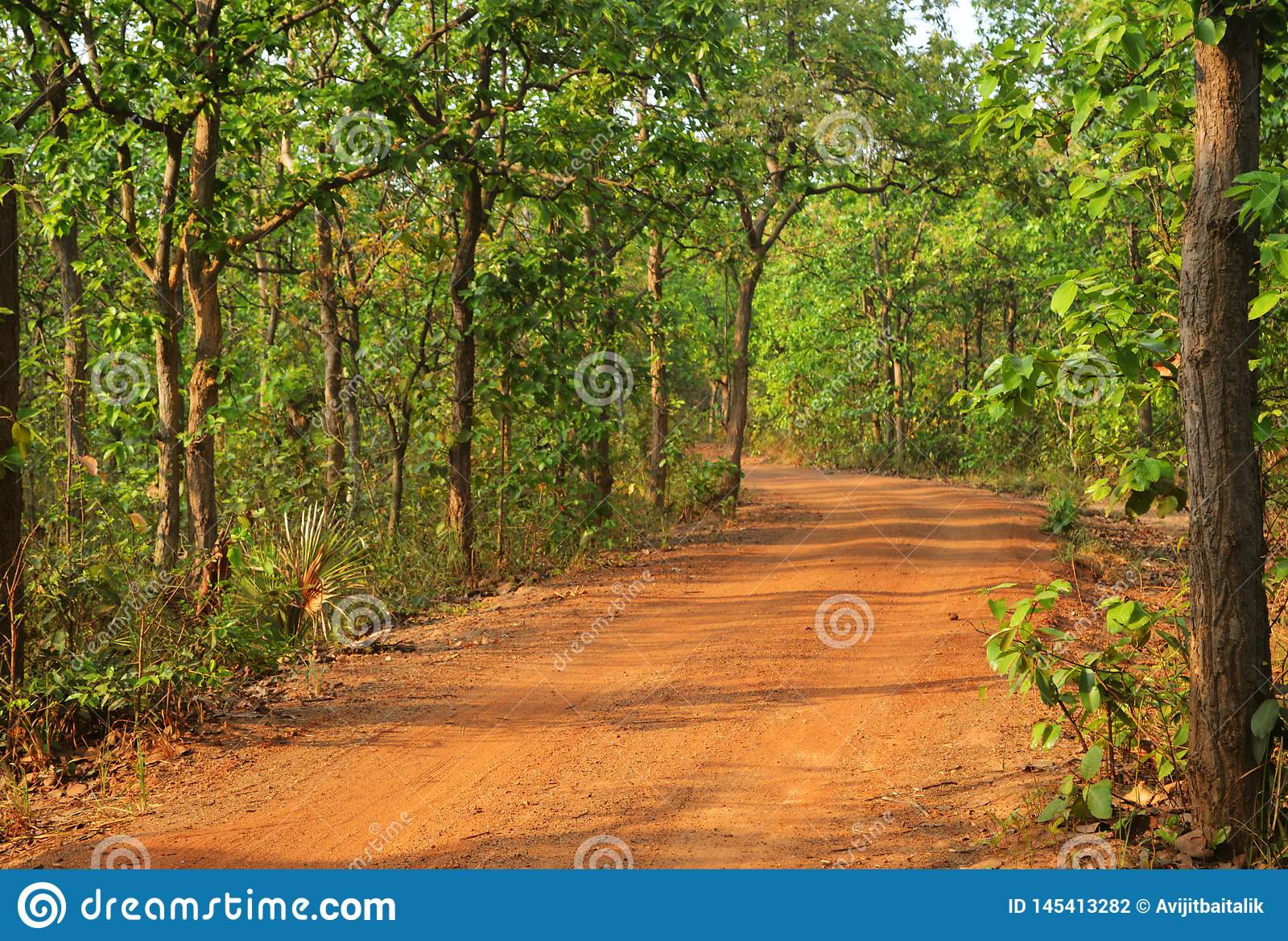 美丽的路在birbhum的森林里