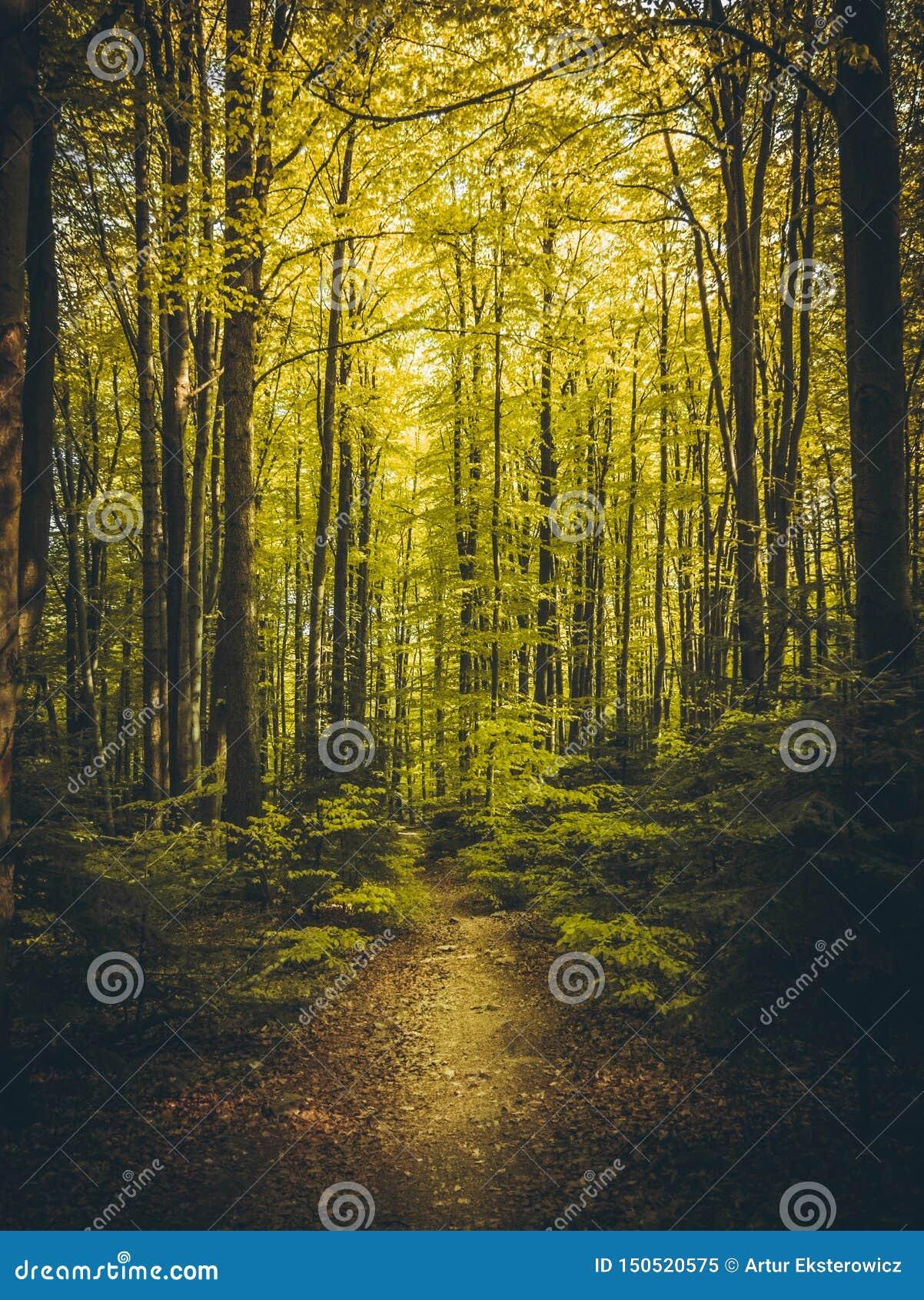 美丽的道路在夏天森林里