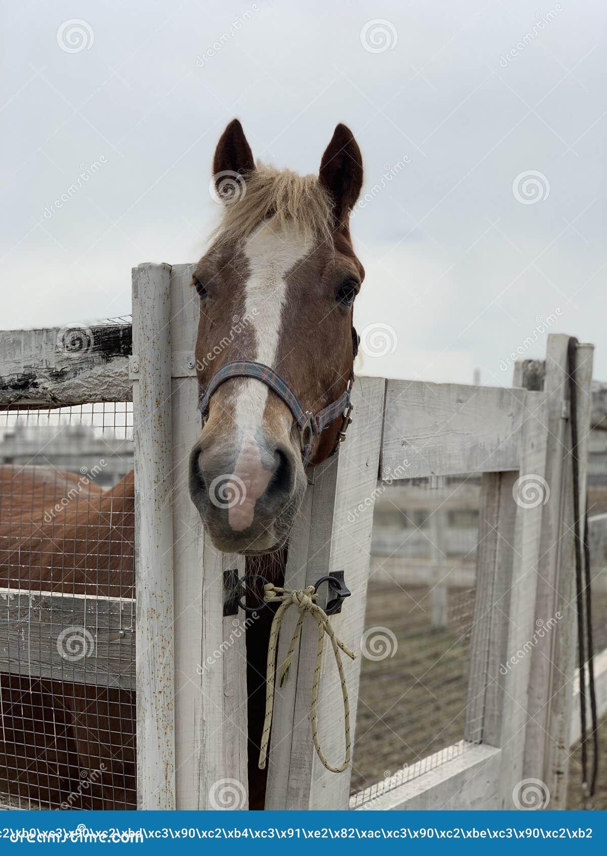 美丽的马在槽枥
