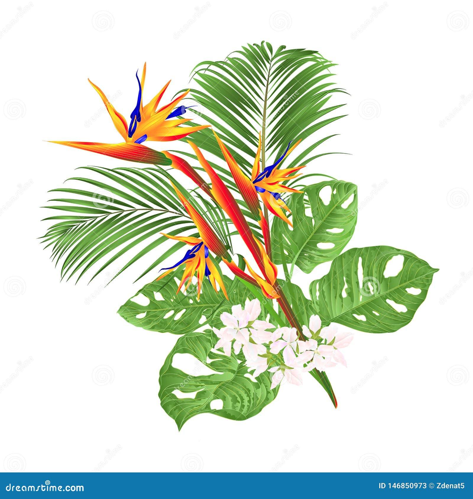 美丽的鹤望兰reginae热带花和monstera和棕榈在编辑可能白色背景葡萄酒传染媒介的例证