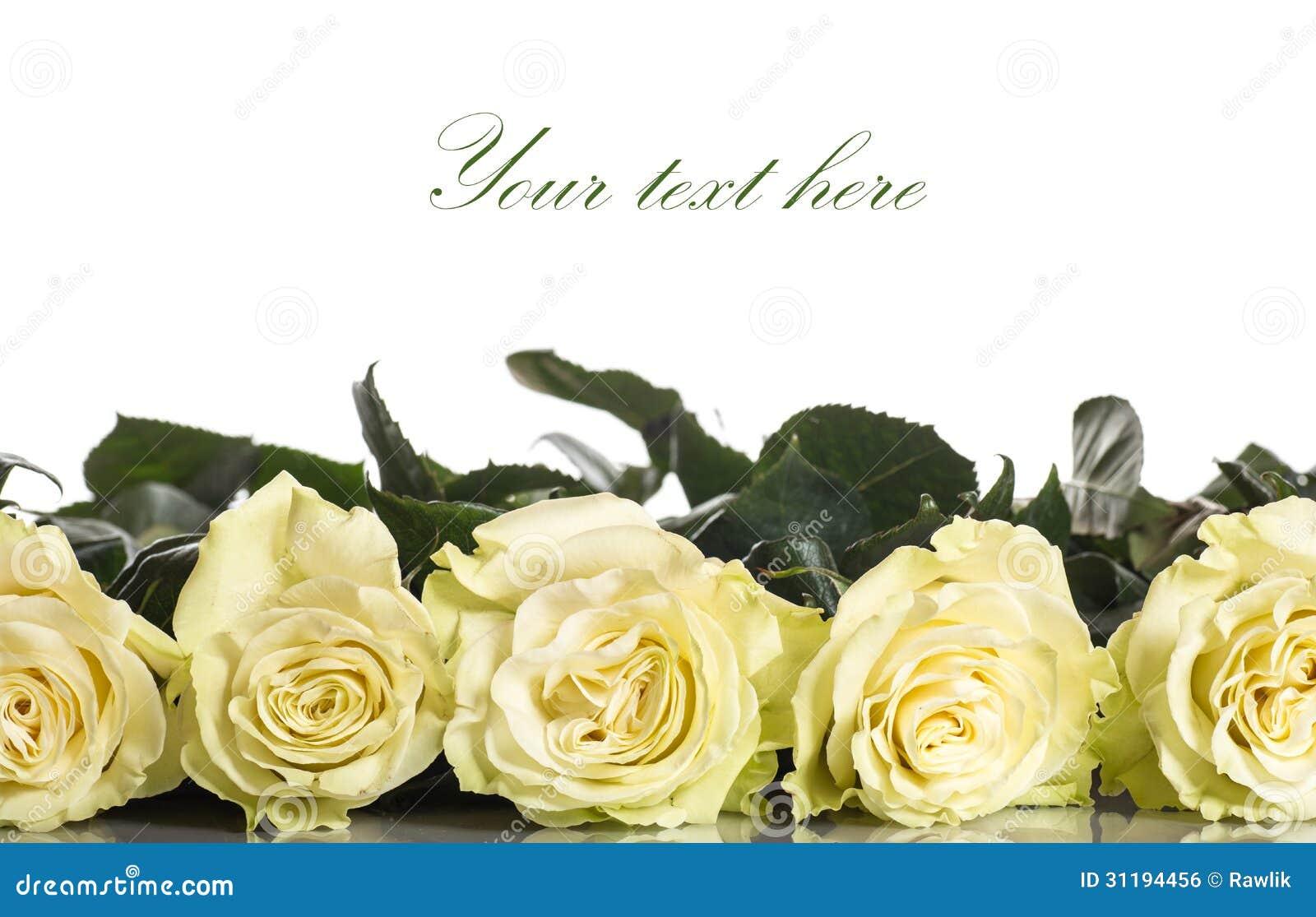 美丽的黄色玫瑰