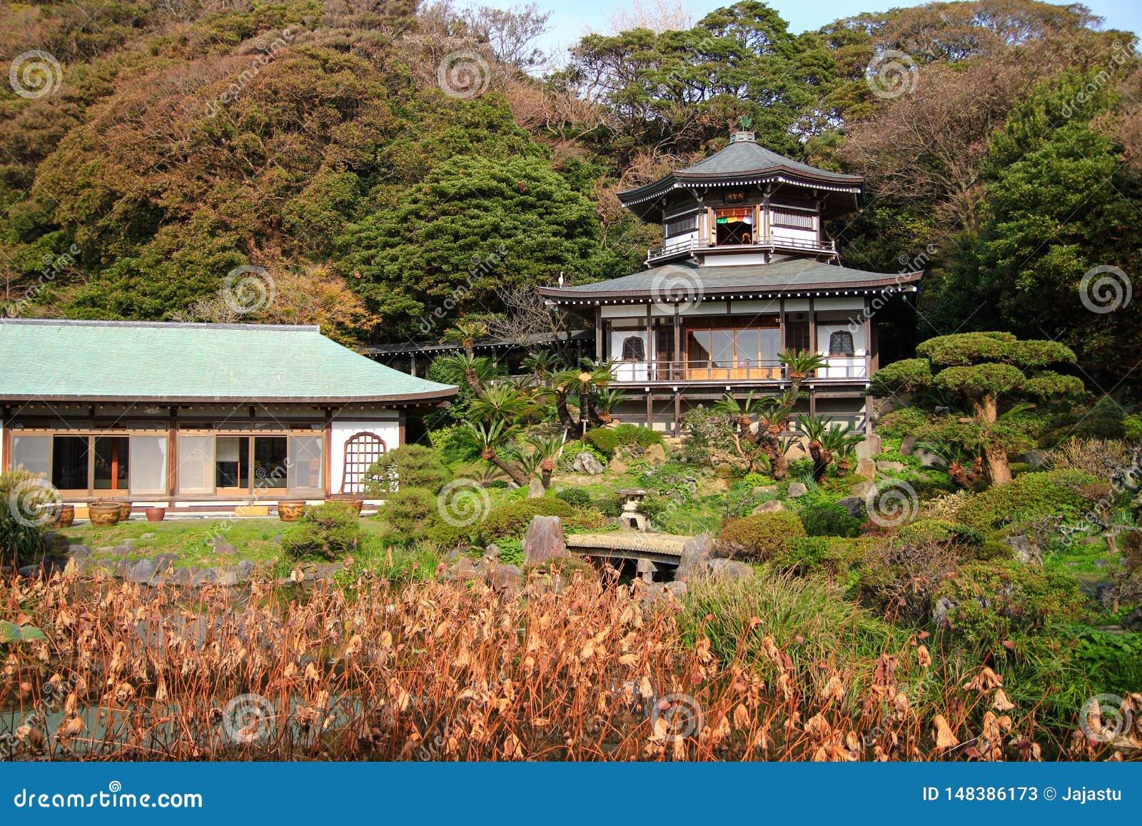 美丽,五颜六色的日本庭院,镰仓