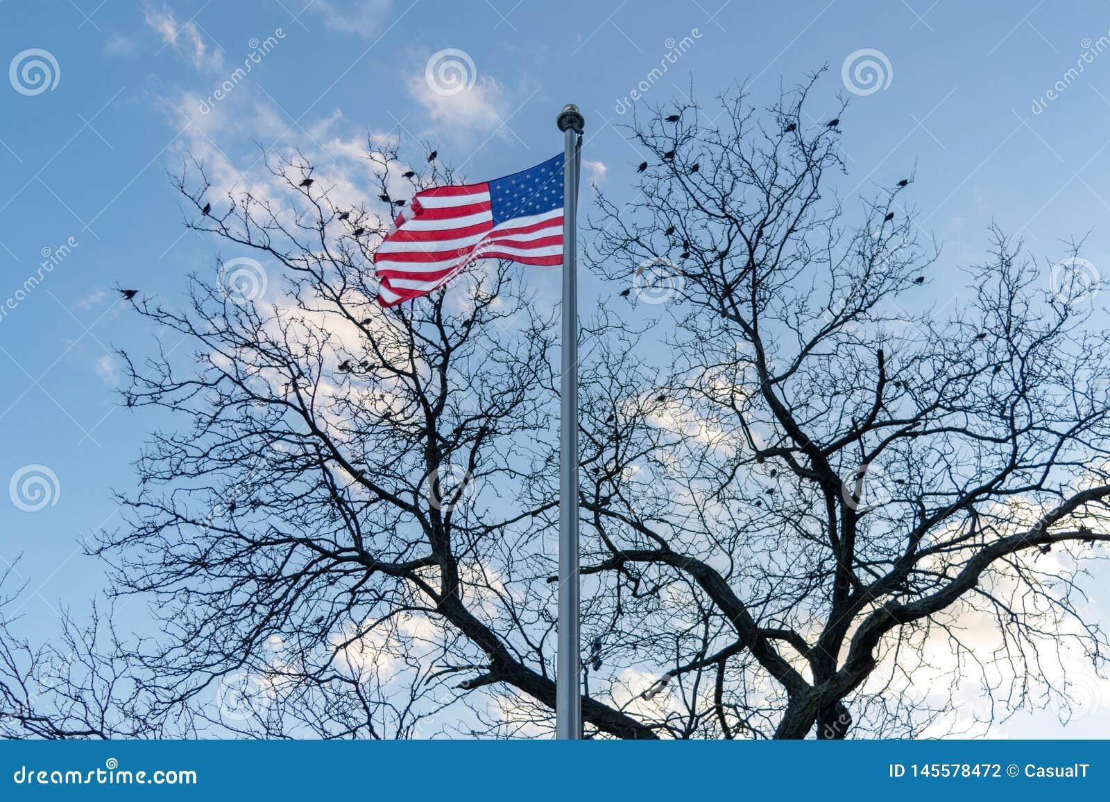 美国国旗、星条旗,吹在风,坐在一棵不生叶的树的鸟在背景,中间地区中