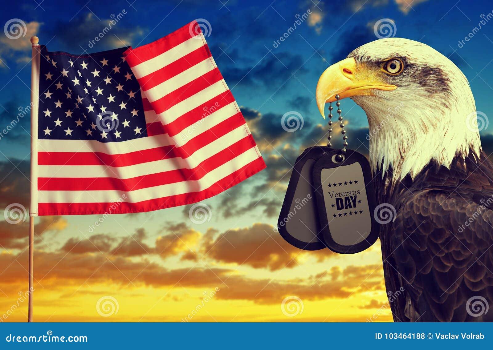美国国旗和白头鹰拿着在他的额嘴的卡箍标记在日落